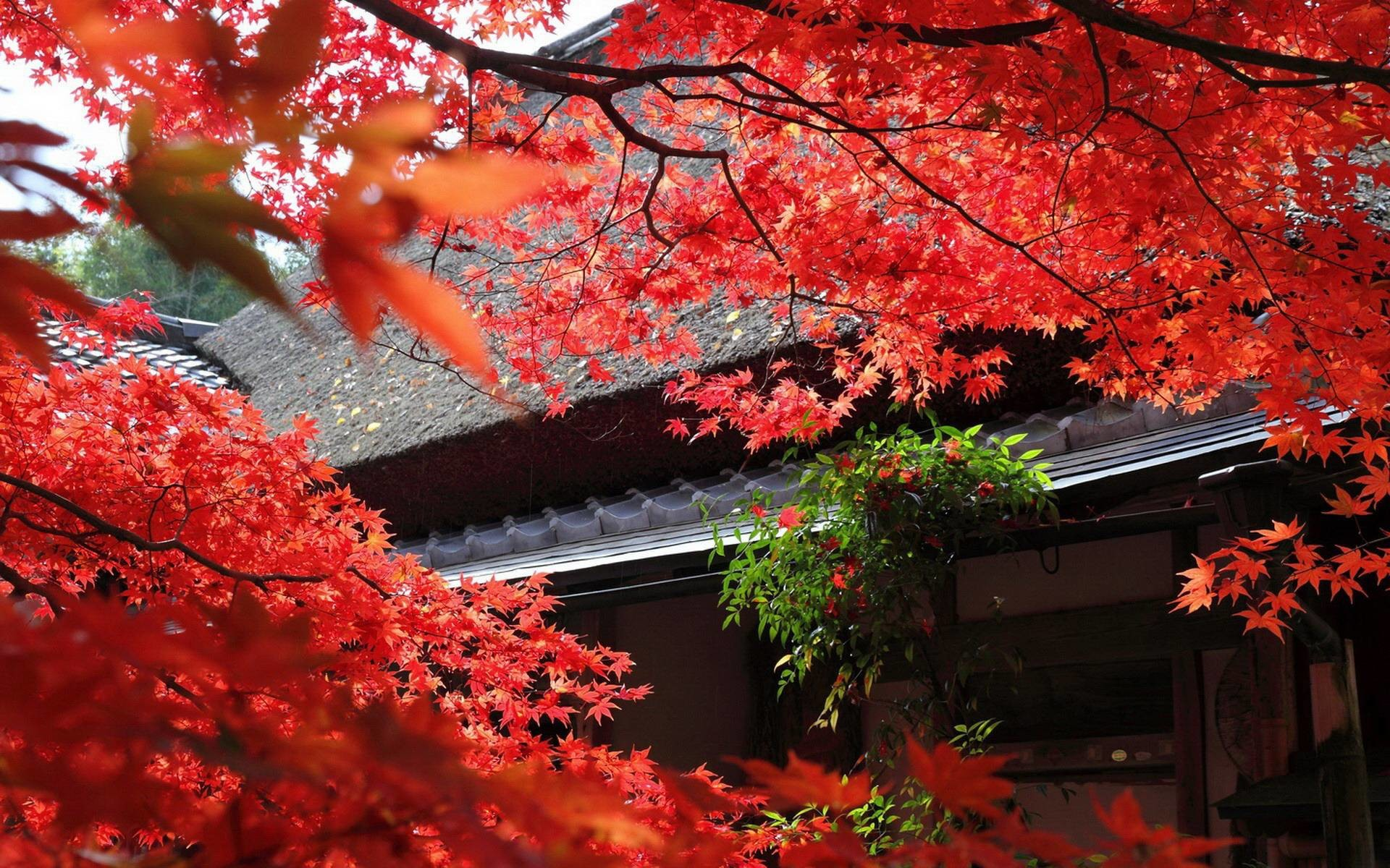 Japanese Garden Wallpapers – Full HD wallpaper search