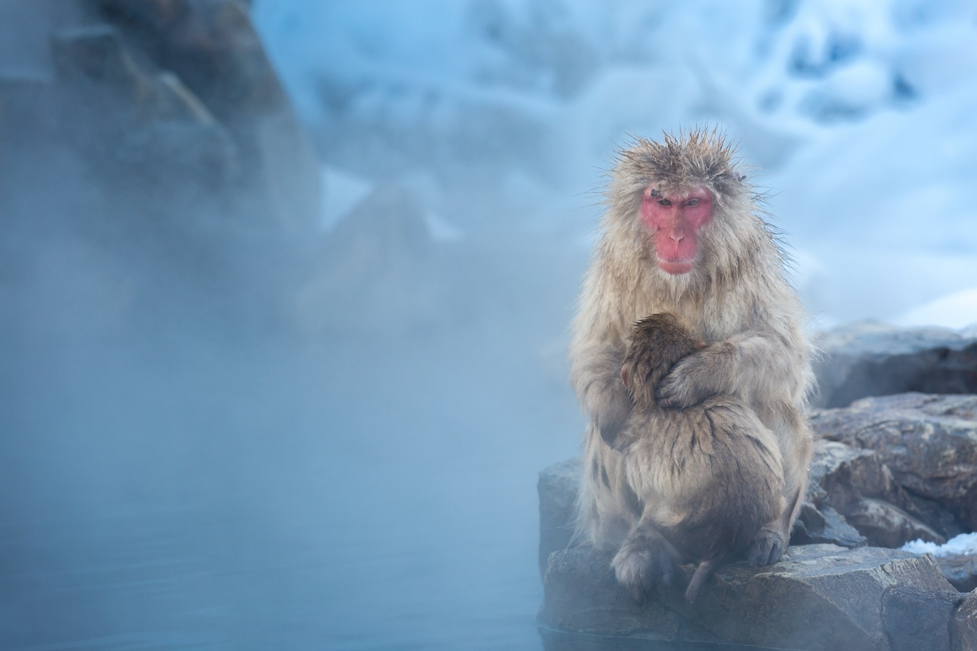 #1632700, japanese macaque category – free desktop wallpaper downloads  japanese macaque