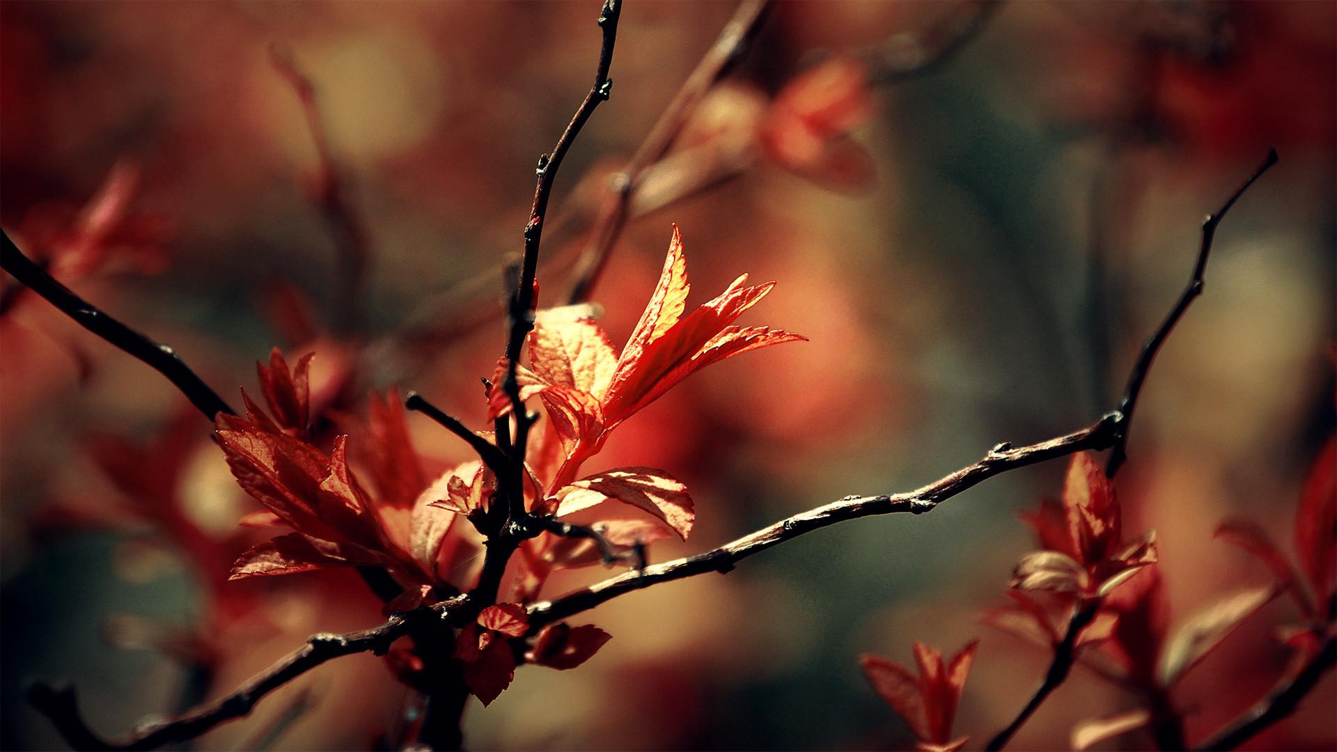 Download Leaves Delight HD Wallpaper
