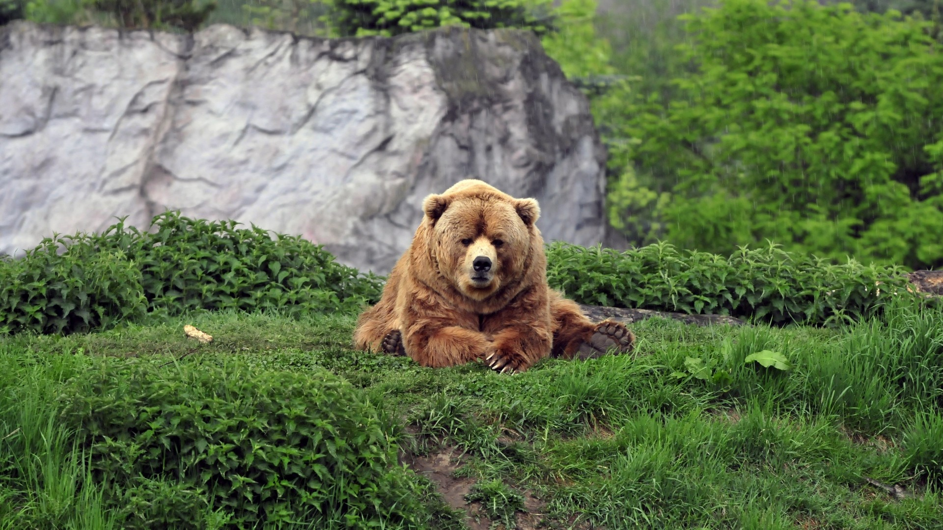 Bears Wallpapers 1366×768 Pictures Of Bears Wallpapers (57 Wallpapers) |  Adorable Wallpapers | Desktop | Pinterest | Bear wallpaper and Wallpaper