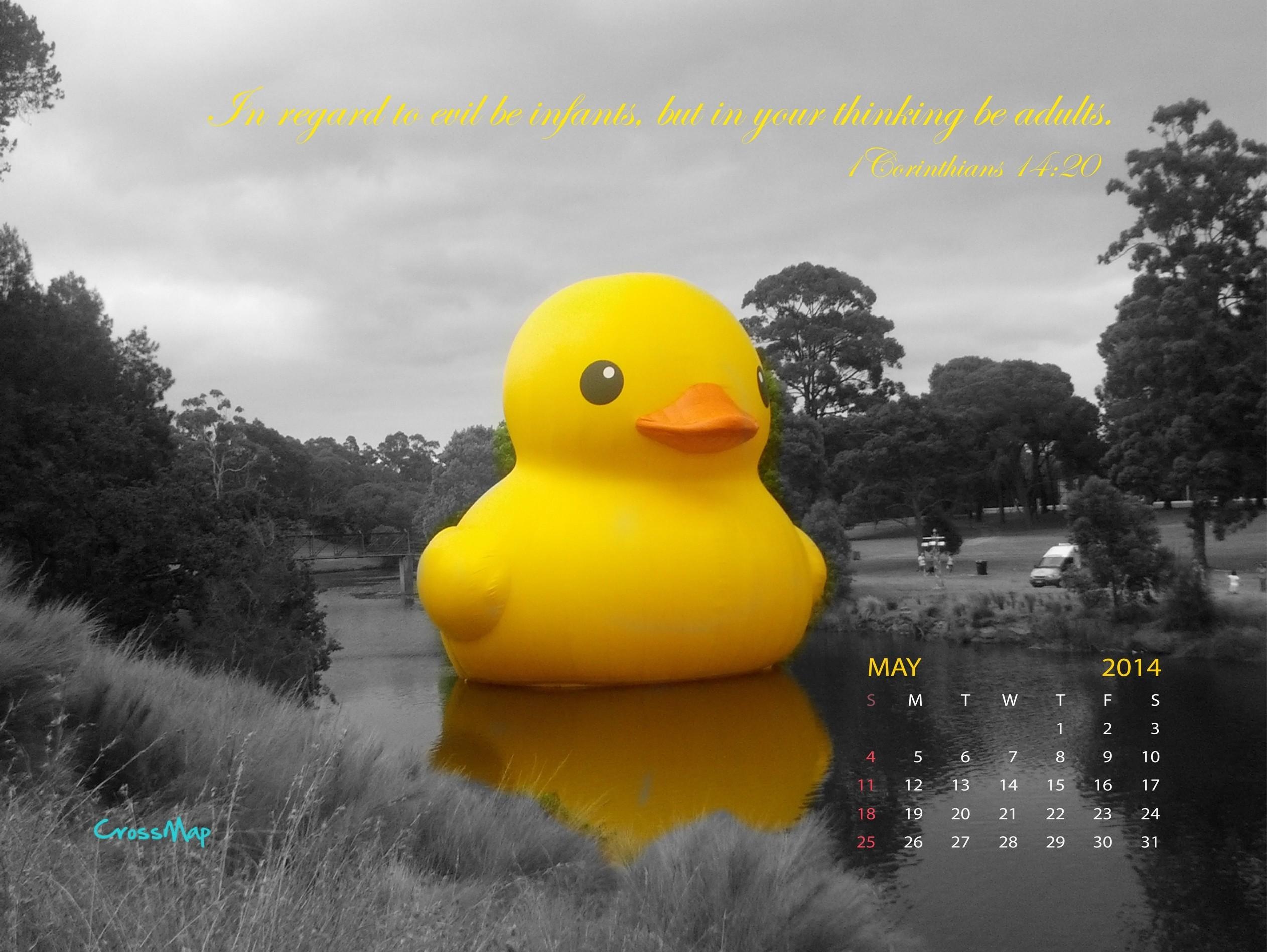 Yellow Rubber Duck 2014 Calendar Wallpaper – May
