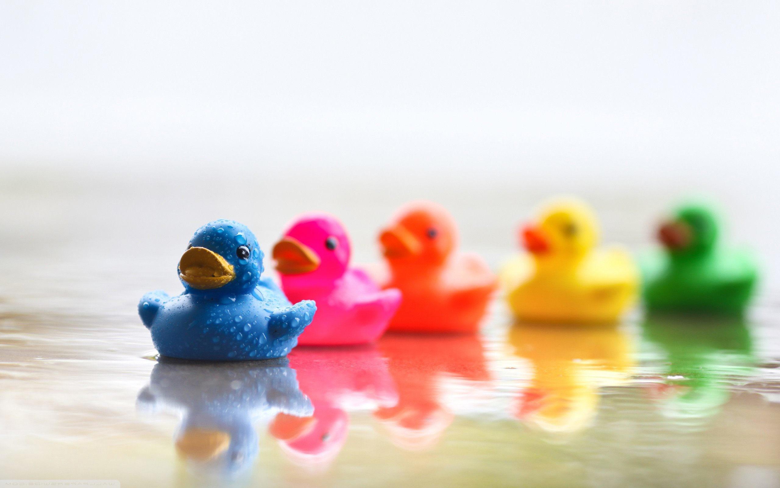 Rubber Ducks HD Wallpaper