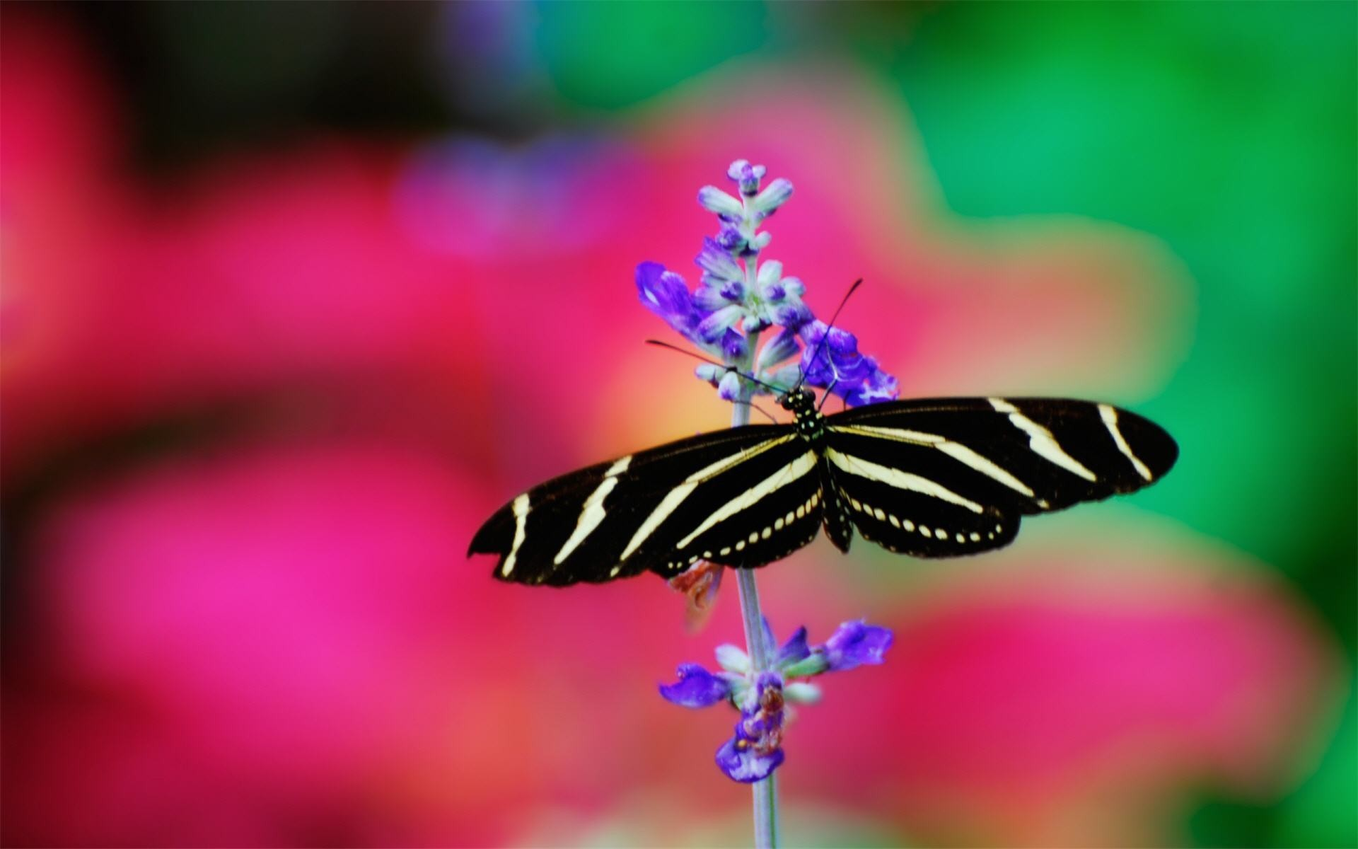 butterfly black and white wallpaper images with high resolution wallpaper  on animal category similar with 3d