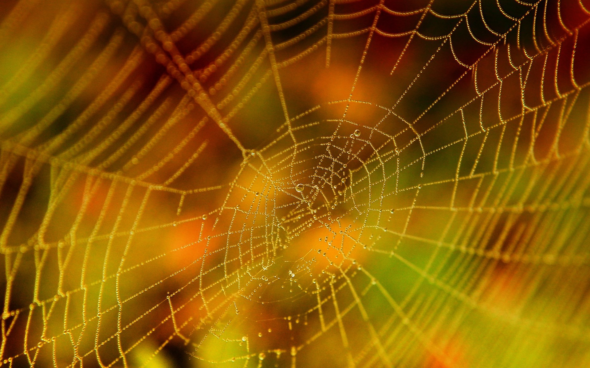 spider web wallpaper hd backgrounds images, (501 kB)