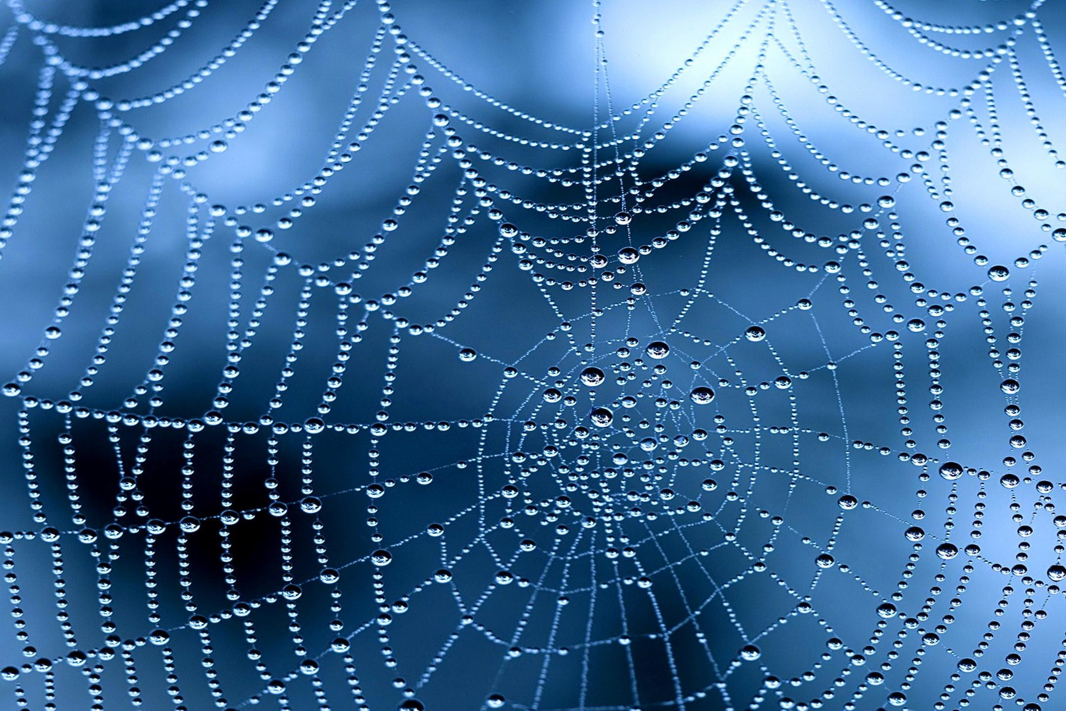 Photography – Spider Web Close-Up Water Drop Dew Drop Wallpaper