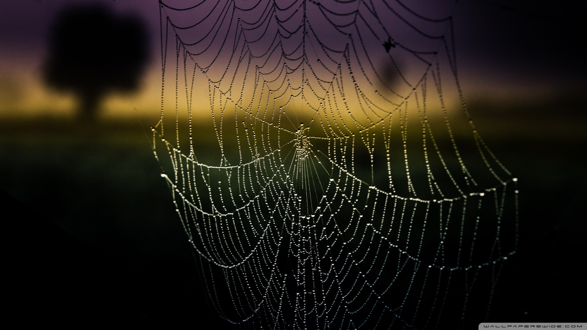 Spider Web Background – Bing images