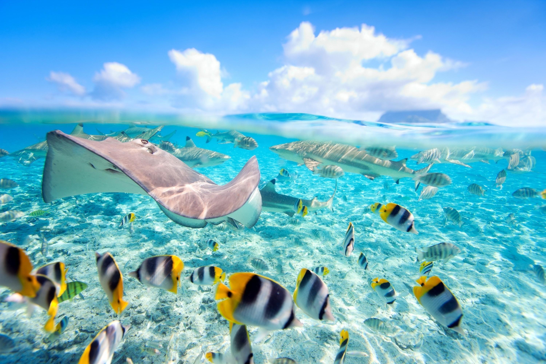 Animal – Fish Reef Underwater Shark Stingray Wallpaper