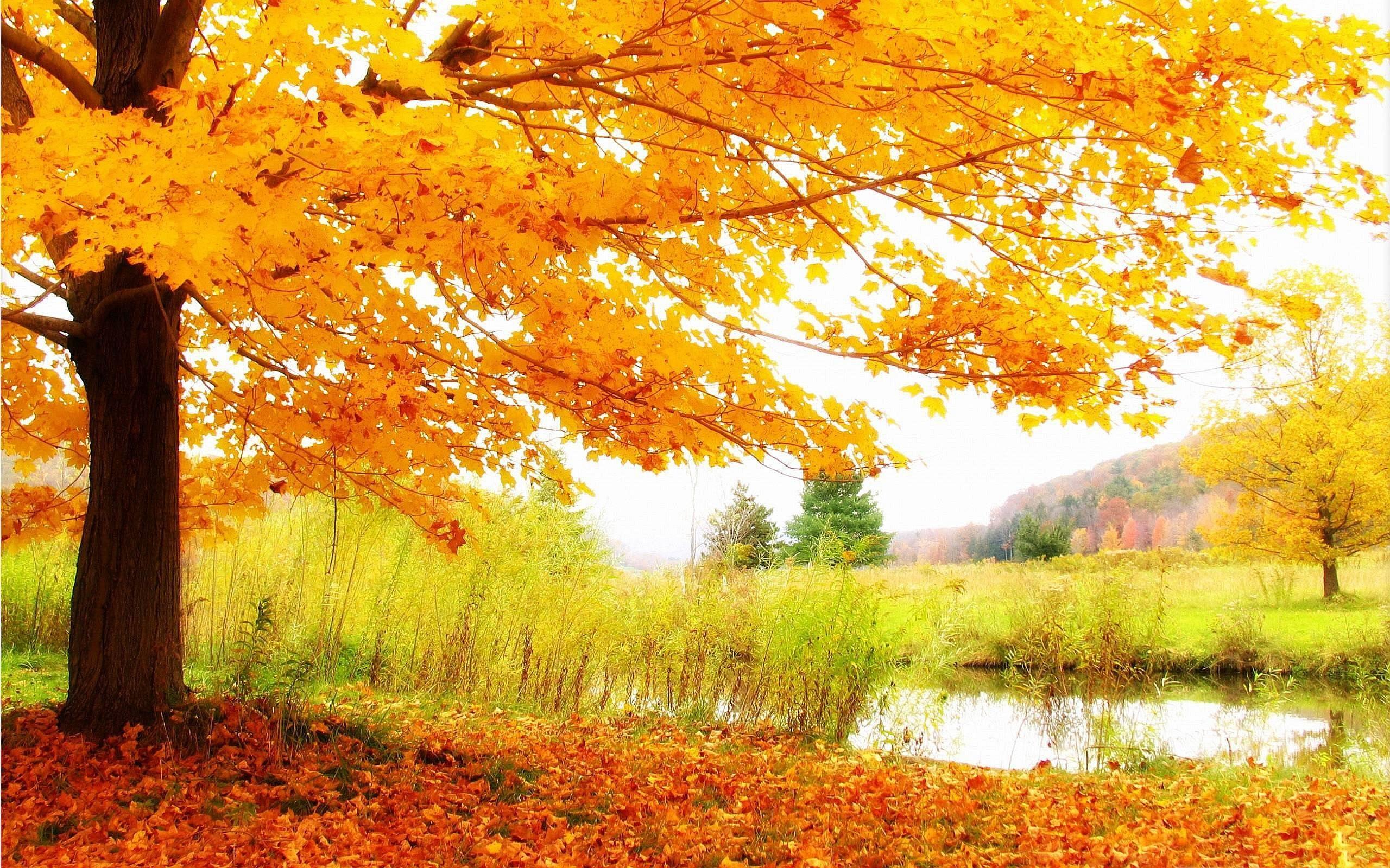Tree Scenery Wallpaper HD Desktop Backgrounds Free