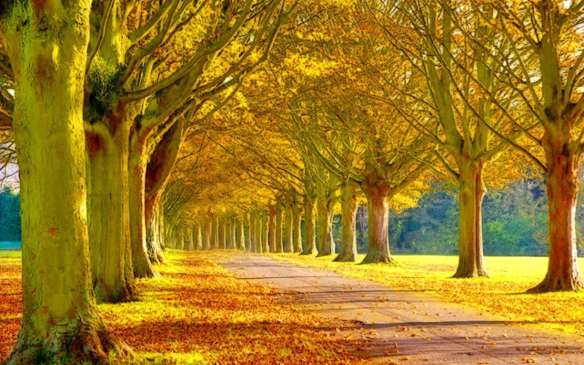 Beautiful Scenery wallpaper
