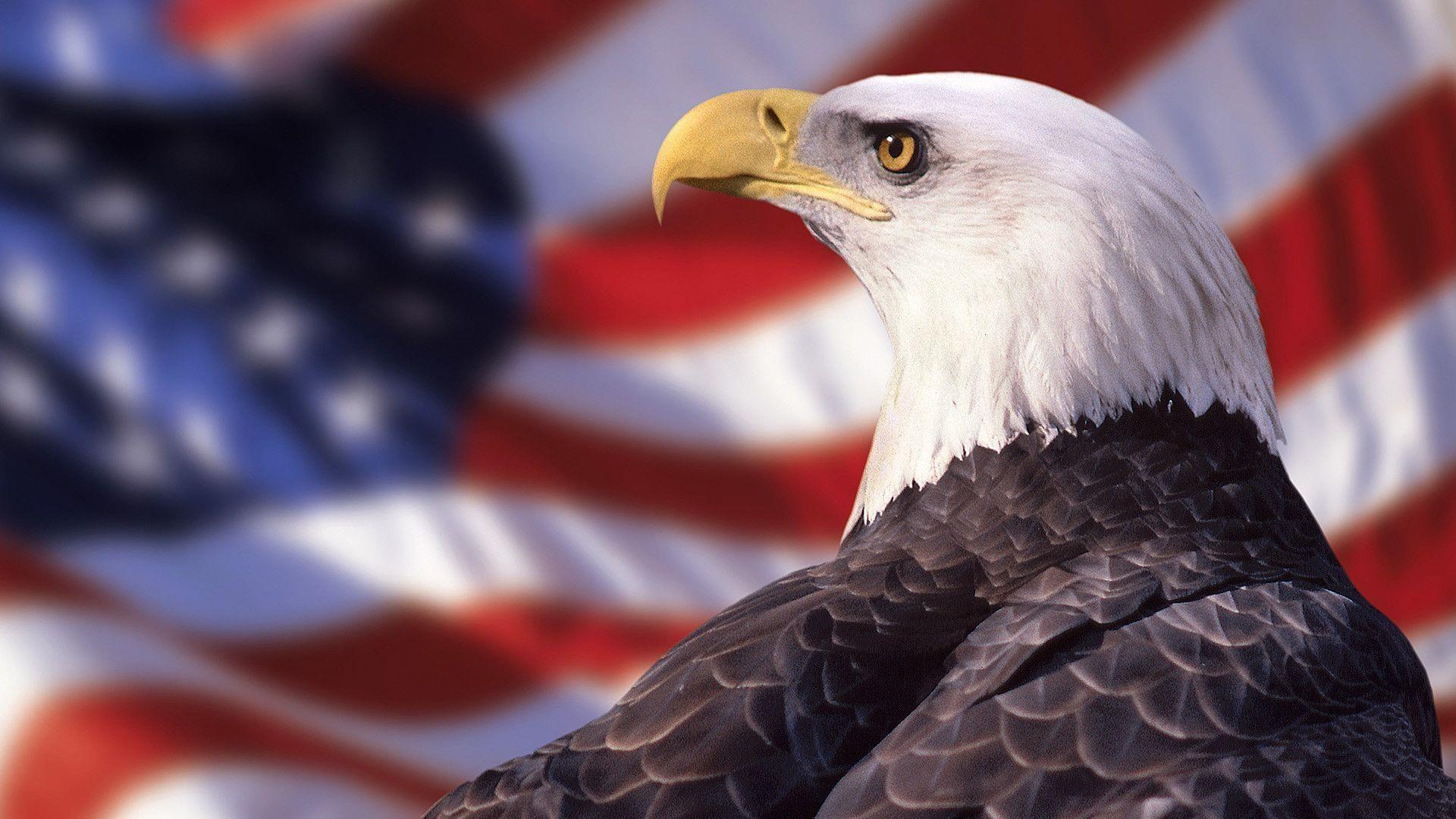Bald Eagle American Flag Wallpaper | Best Free Wallpaper