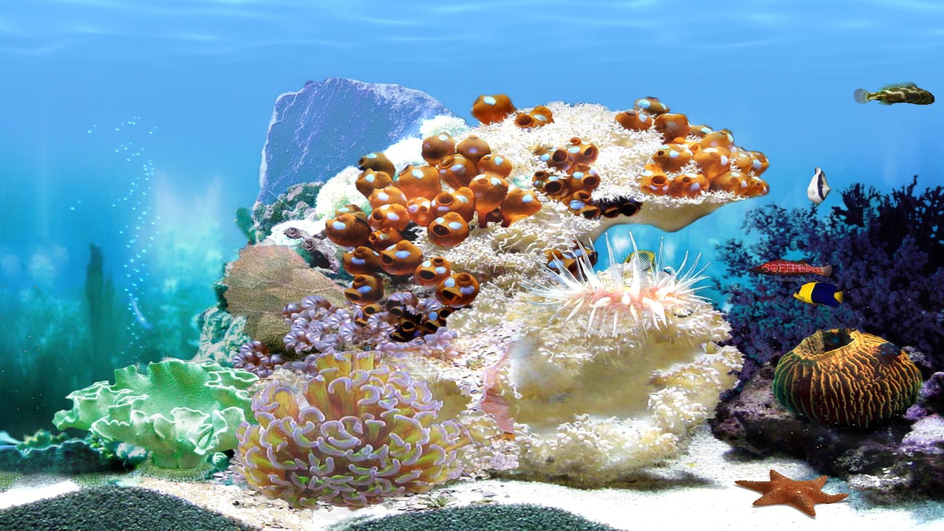 Aquarium Bildschirmschoner Kostenlos Tv : Aquarium wallpaper animated  wallpapersafari