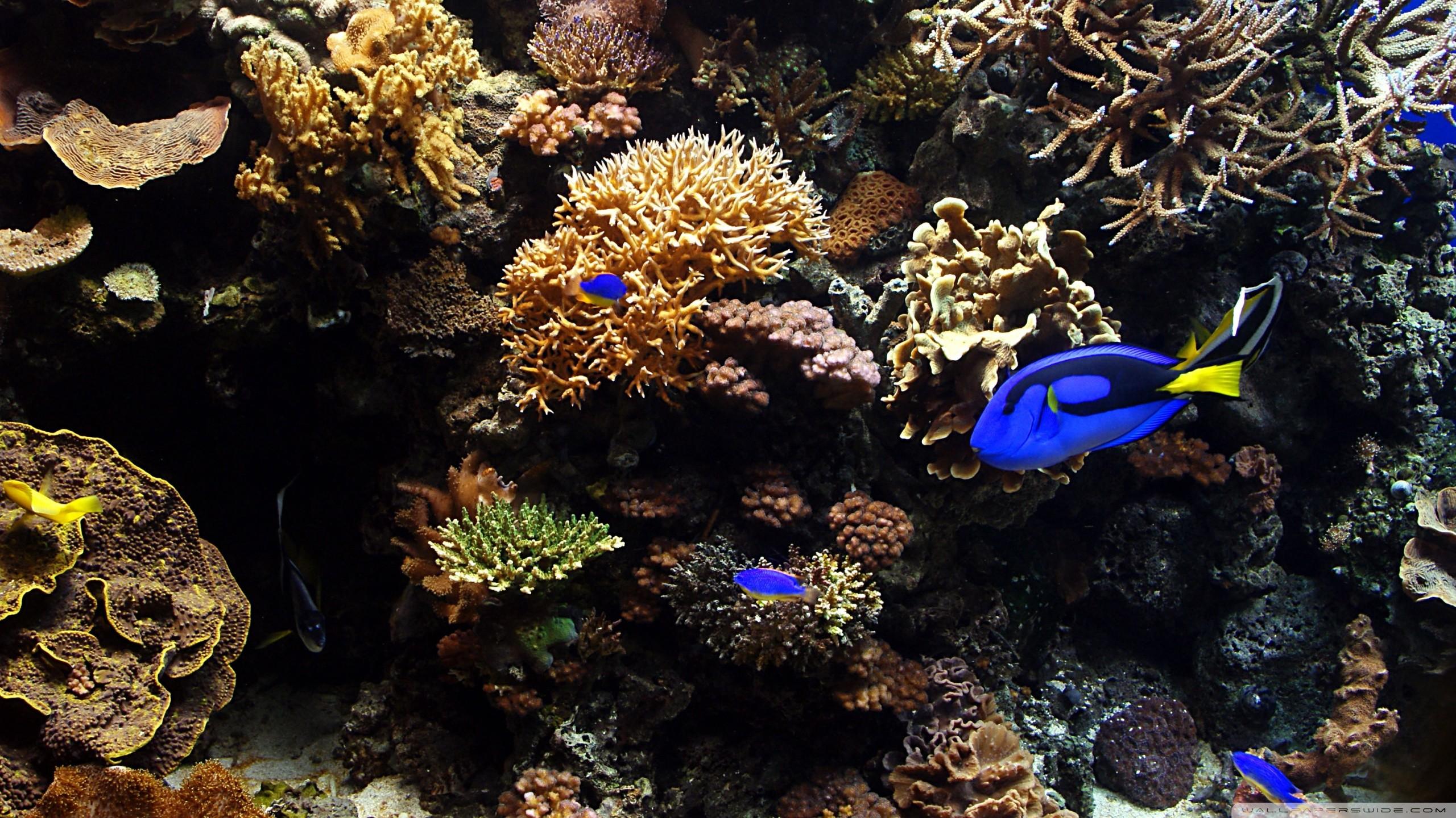 Aquarium Wallpaper For Desktop Free Download : Aquarium fish hd desktop  wallpaper : widescreen : high