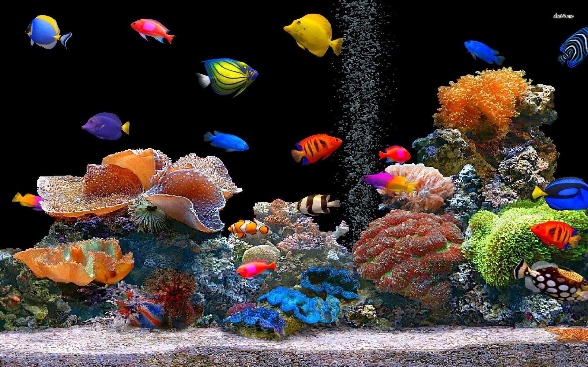 Tropical Fish School Desktop Animal 1920 X 1080 Oscar Fish Desktop .