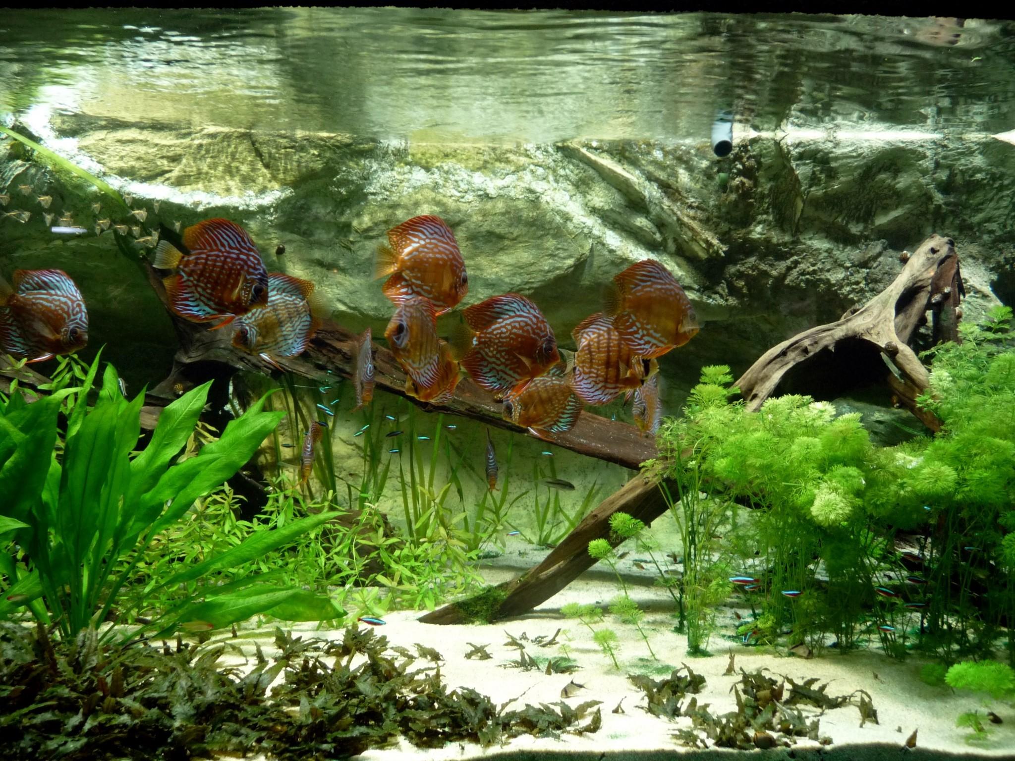 aquarium wallpaper desktop