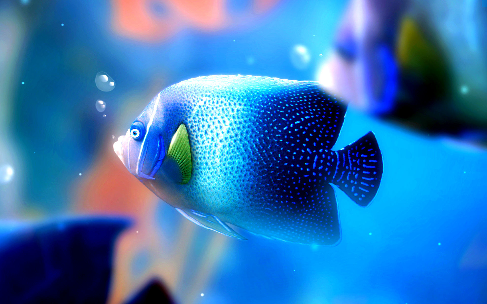 Click here to download in HD Format >> Fish Hd Wallpaper 35 http:/