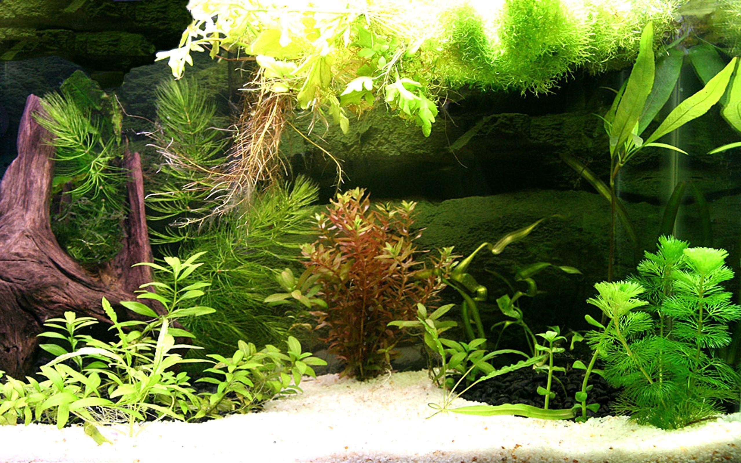 Aquarium Live Wallpaper Windows 2560×1600