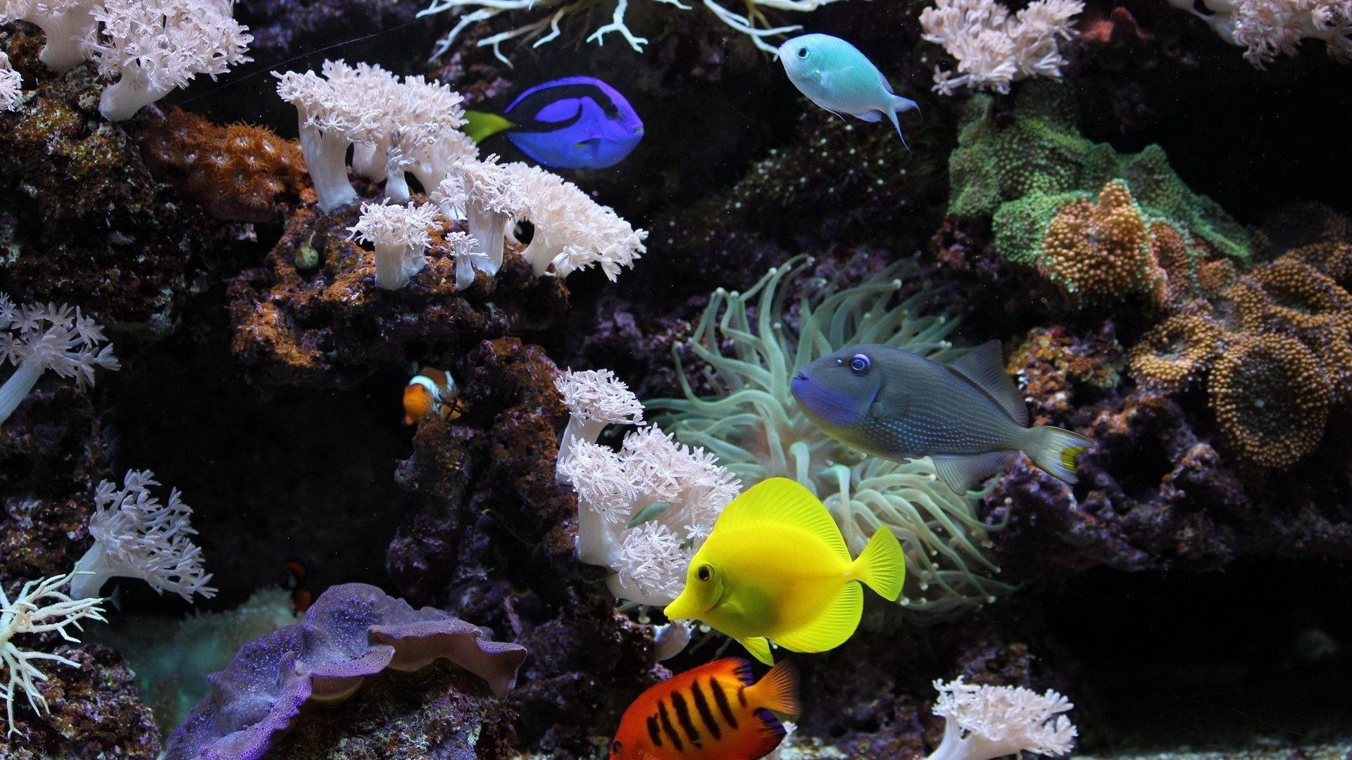 Fish Tag – Corals Fish Underwater Nature Aquarium Beautiful Wallpapers for  HD 16:9 High