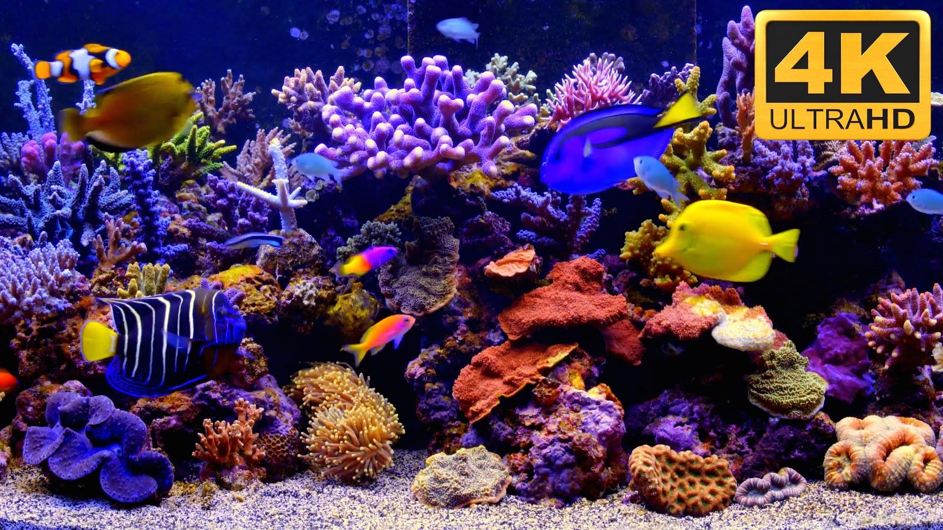 Full Size of Fish Tank Free Fish Tank Tv Screensaver Download Best With  Soundfish Windows Fish …