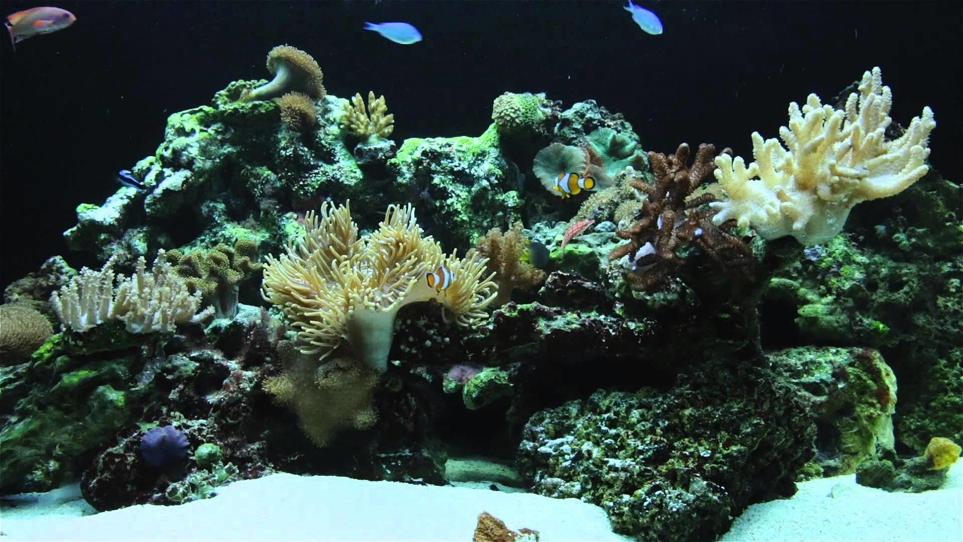 Full Size of Fish Tank Maxresdefault Fish Tank Screensaver Free With  Soundfish Windows Live Downloadfish Fish …