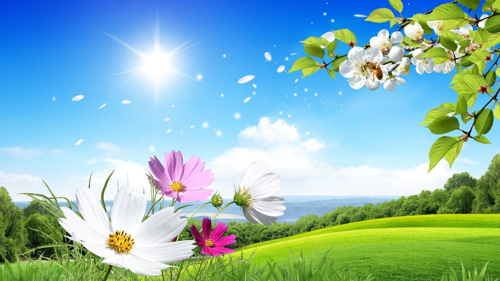 … desktop beautiful summer images widescreen …