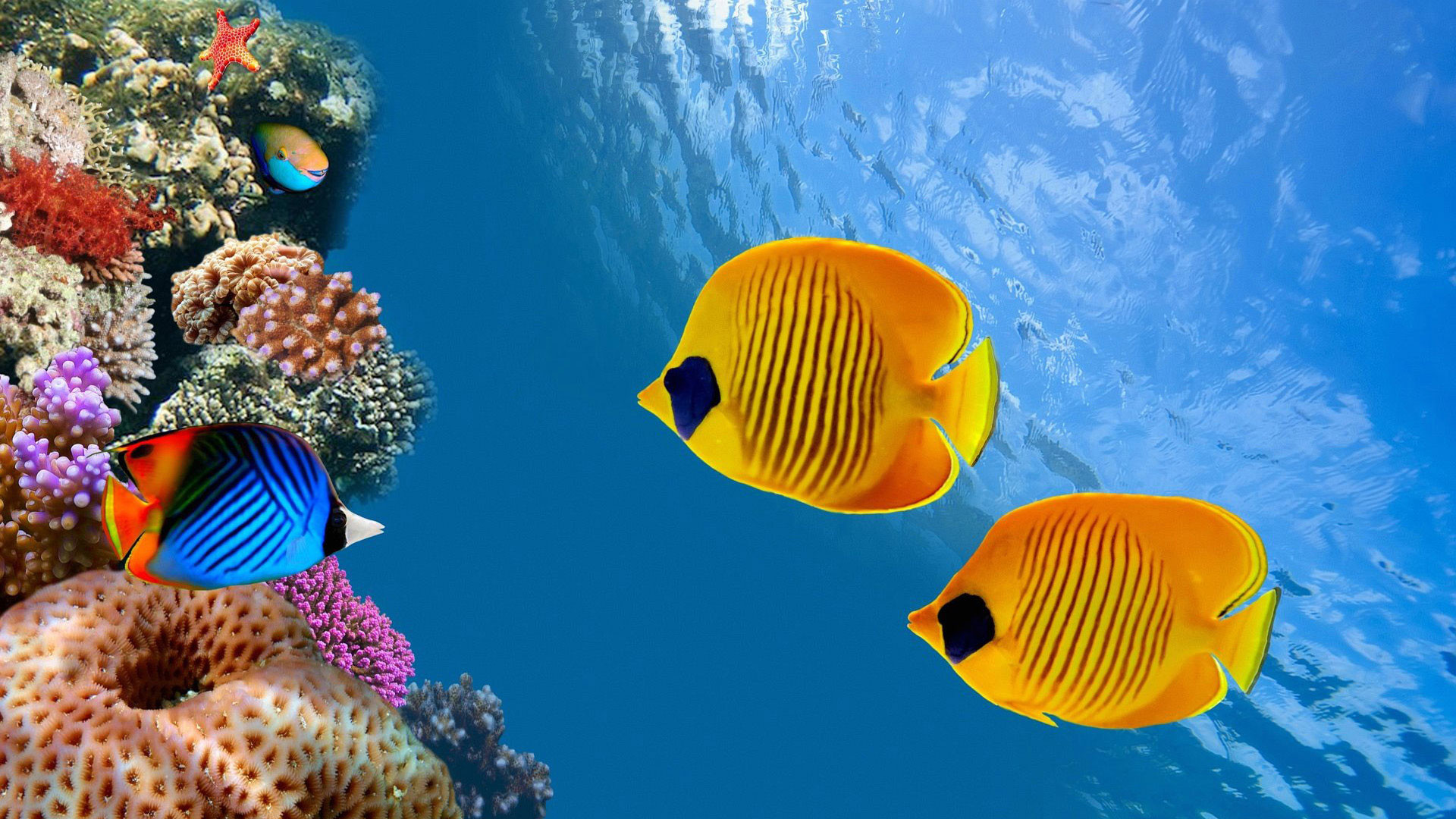 hd pics photos fish marine sea beautiful desktop background wallpaper