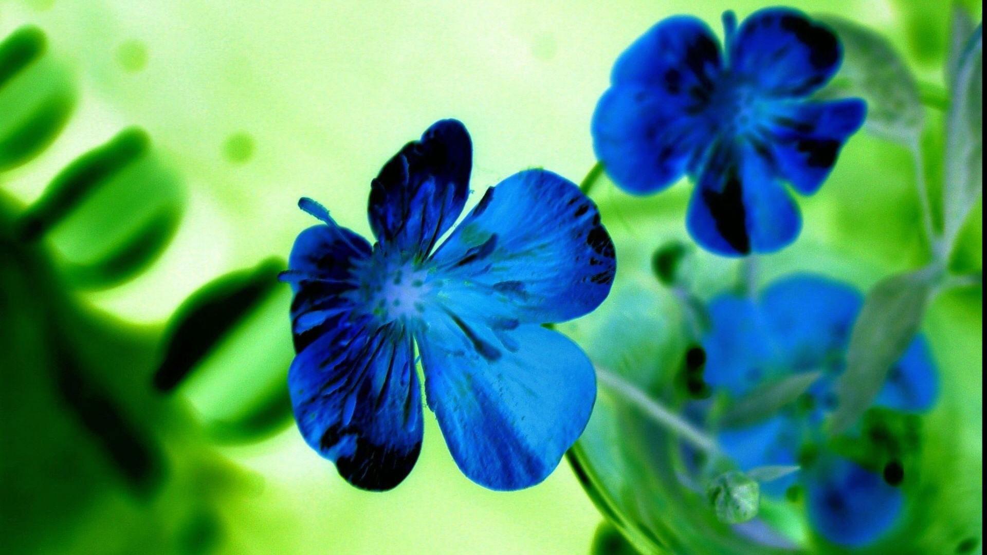 hd pics photos flowers blue green desktop background wallpaper