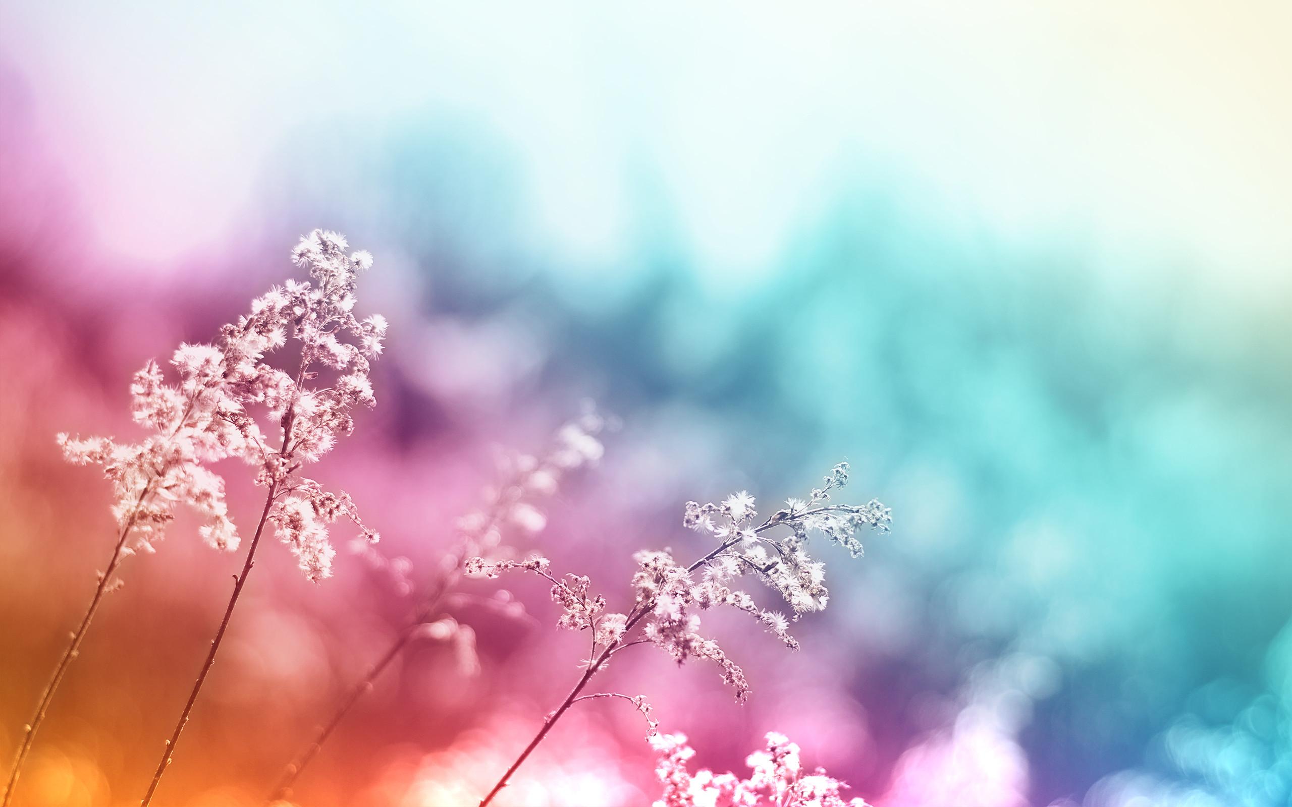 Beautiful colored flower macro wallpaper | Flowers | Pinterest | Wallpaper, Desktop  backgrounds and Wallpaper backgrounds