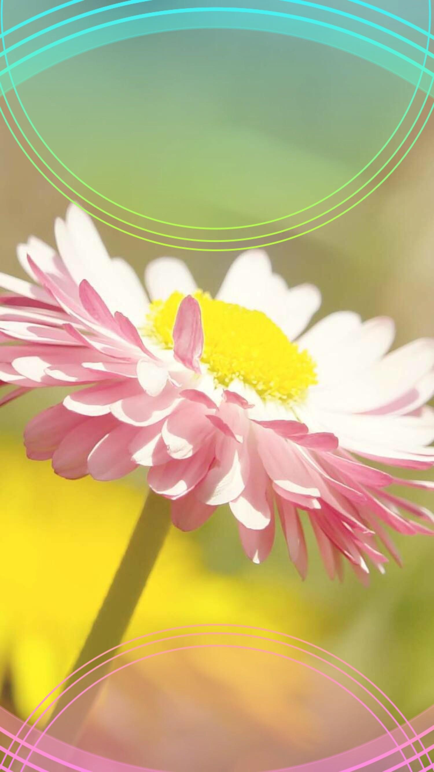 ↑↑TAP AND GET THE FREE APP! Lockscreens Art Creative Flower Nature Pink  Yellow. Wallpaper BackgroundsPhone WallpapersPink YellowIphone …