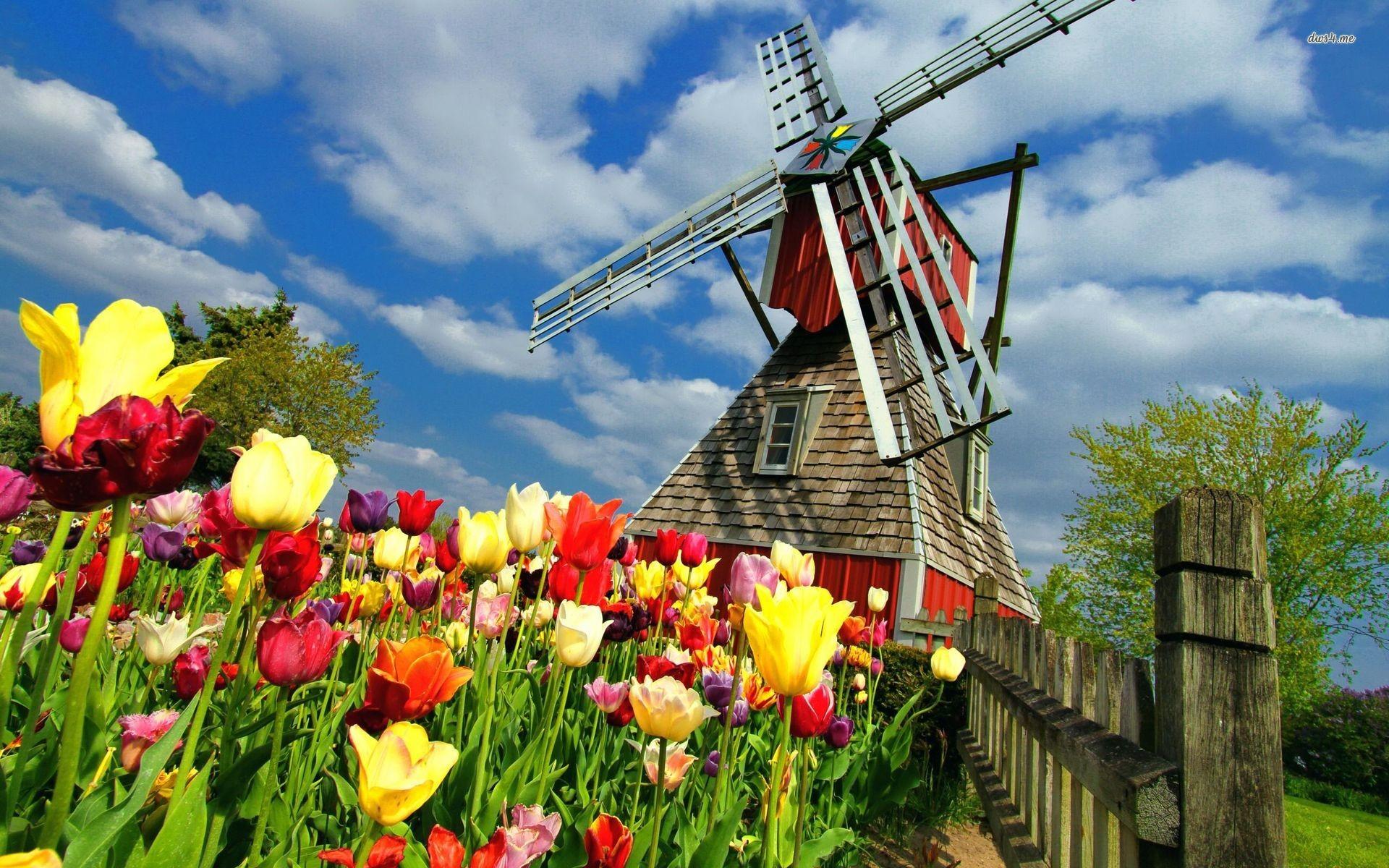 Dutch Windmill Wallpapers Wide