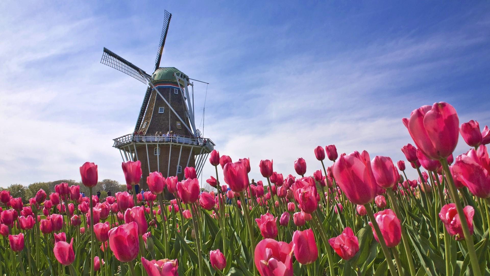 Tulip Festival At Windmill Island Park Holland Michigan Hqworld.