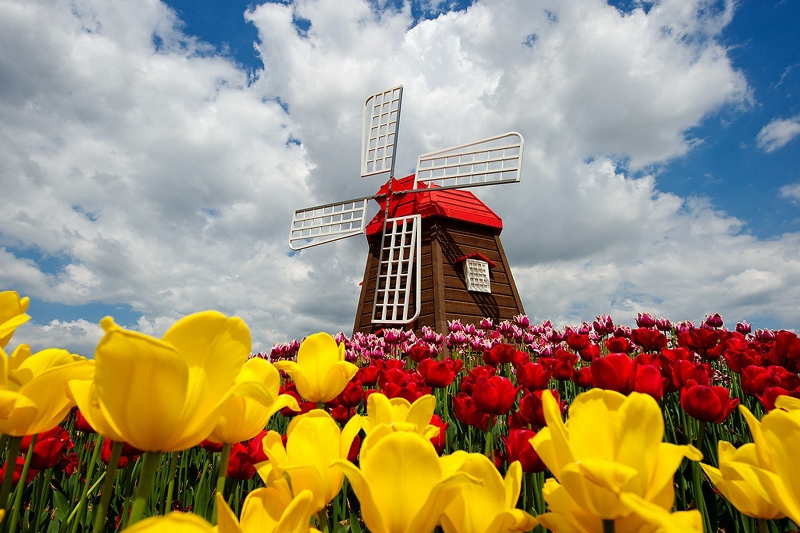 colorful tulips field windmill nature wallpaper KC756 living room home wall  modern art decor wood frame