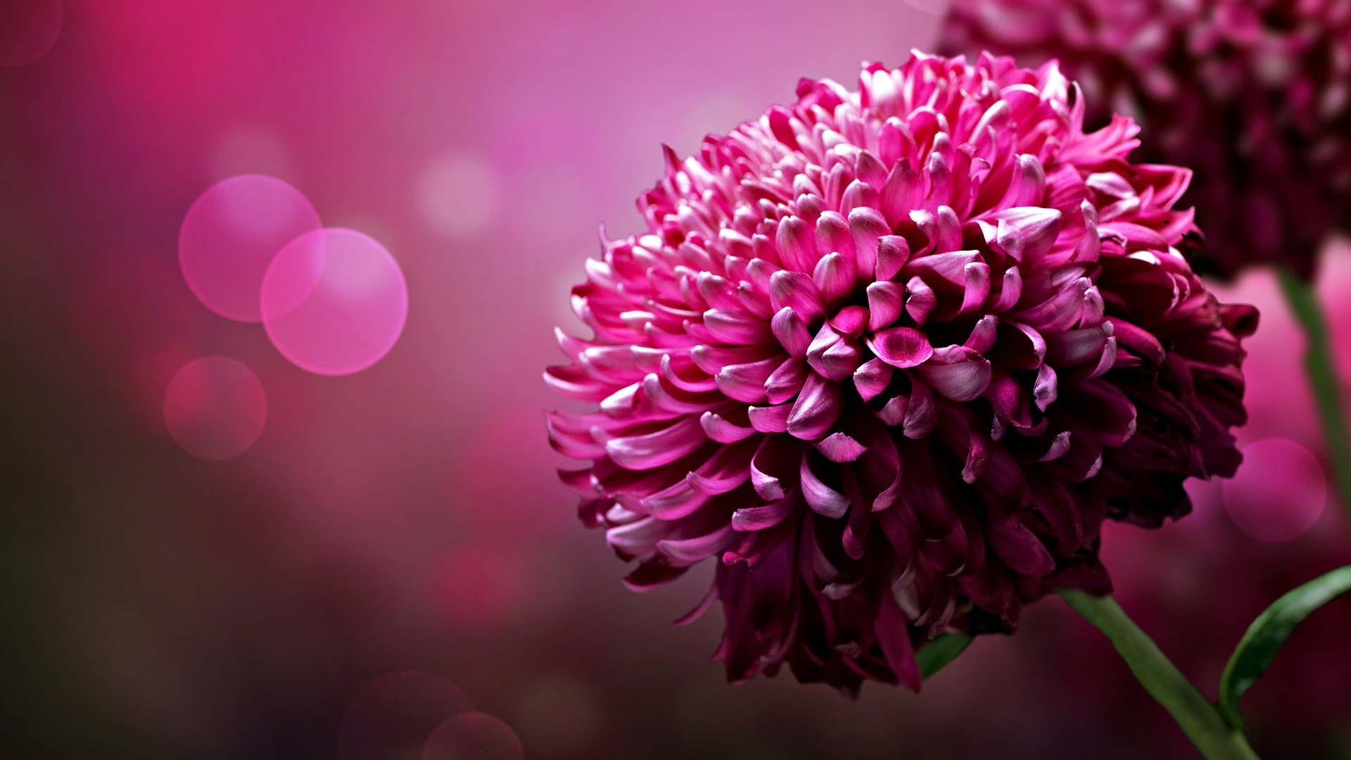 HD Wallpapers Widescreen 1080P 3D | … in 1080p 6 200×112  Beautiful Flowers