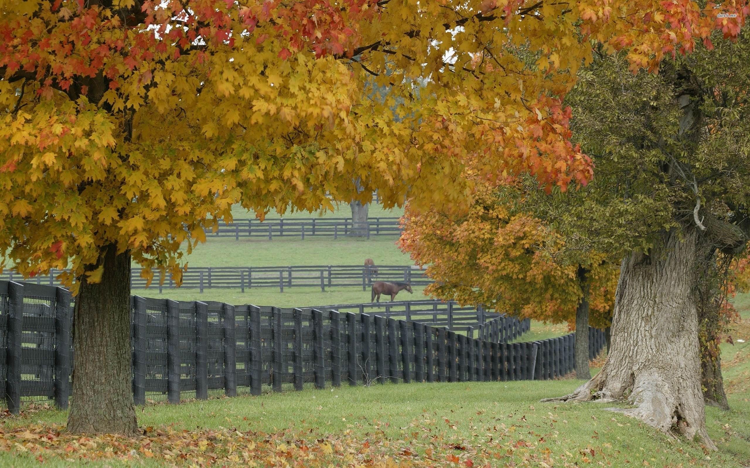 Horse Farm Wallpaper