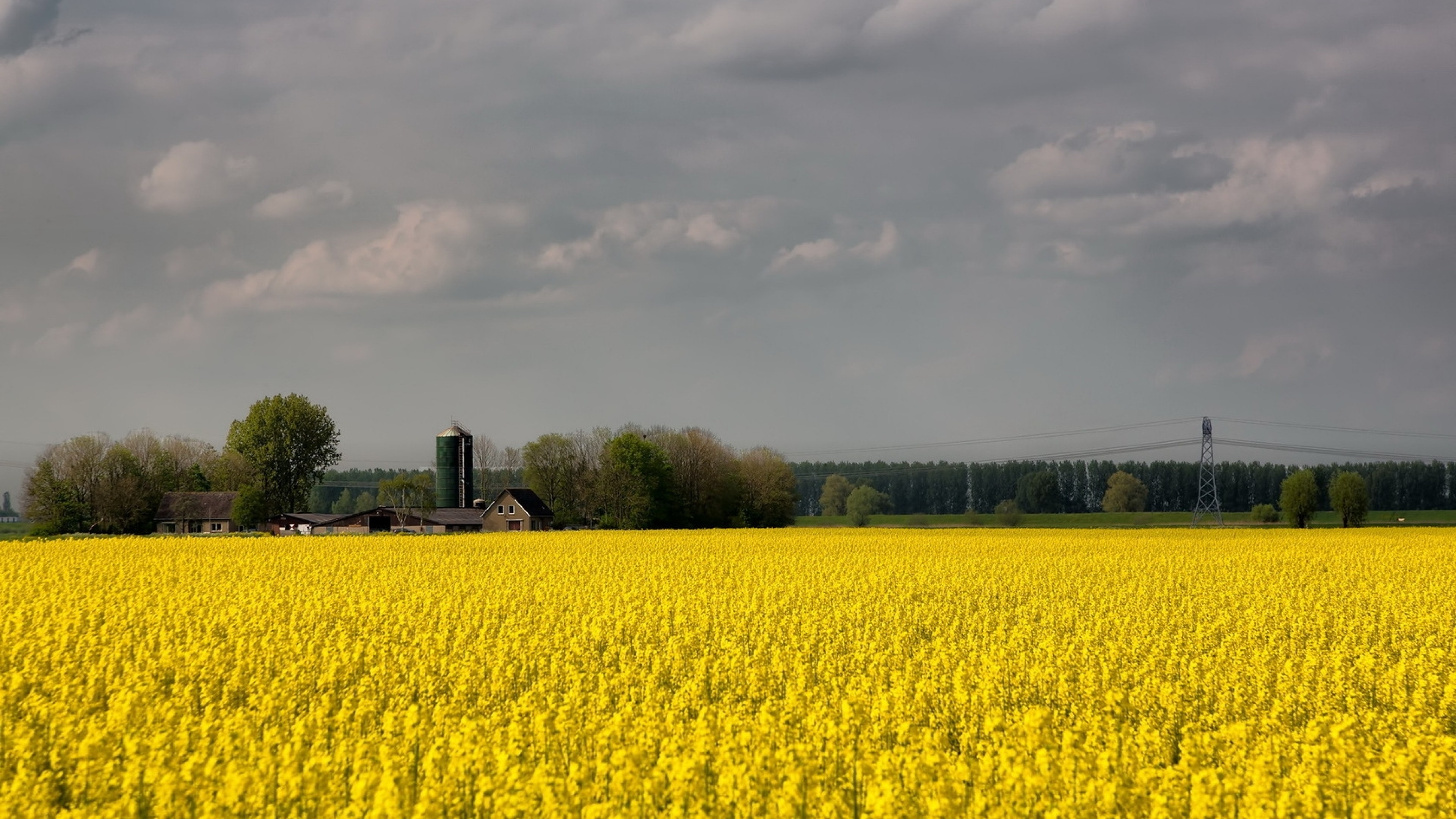 Wallpaper field, flowers, yellow, farm, agriculture, cloudy