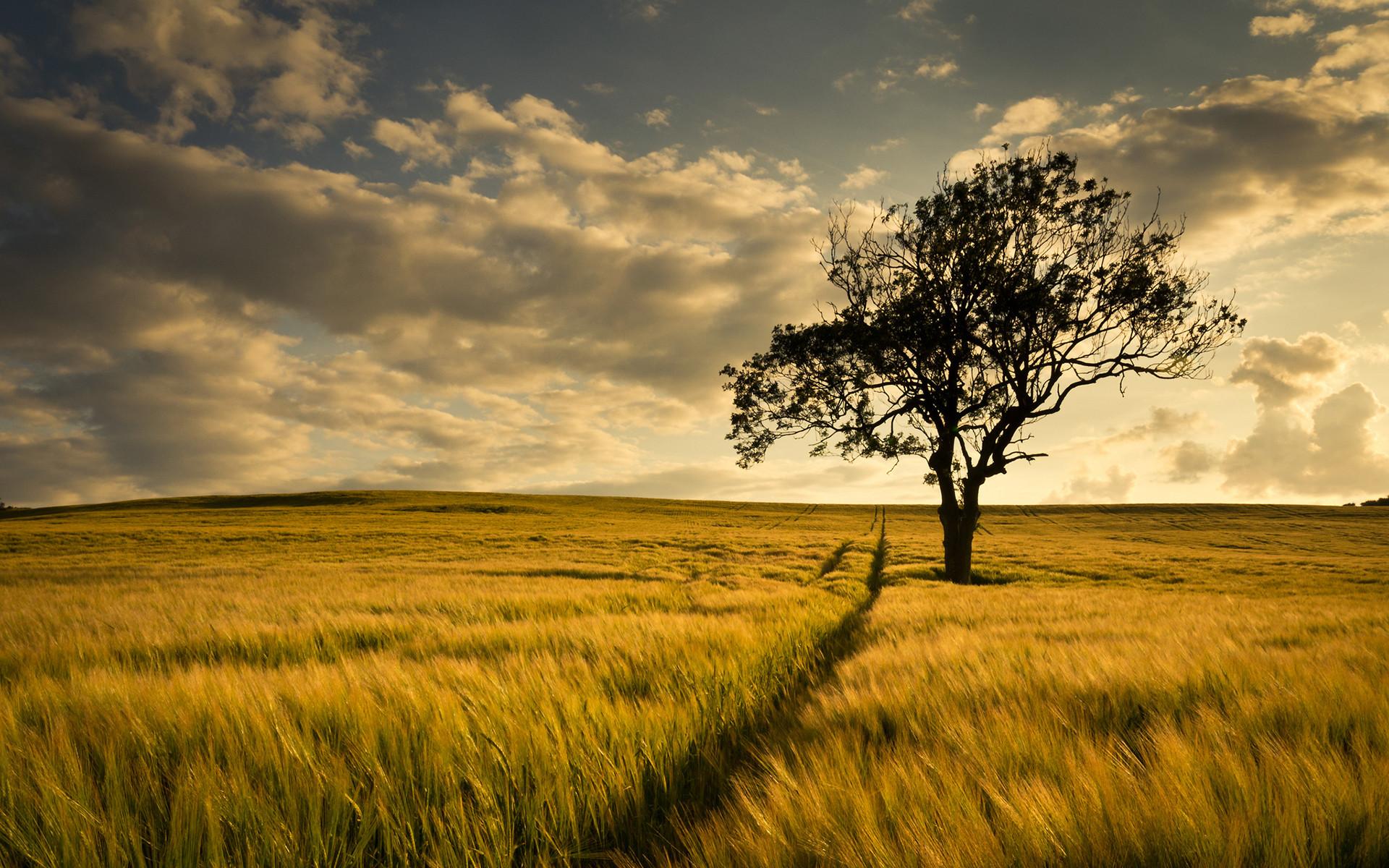 Big Tree Farm Field HD Desktop Wallpaper, Background Image