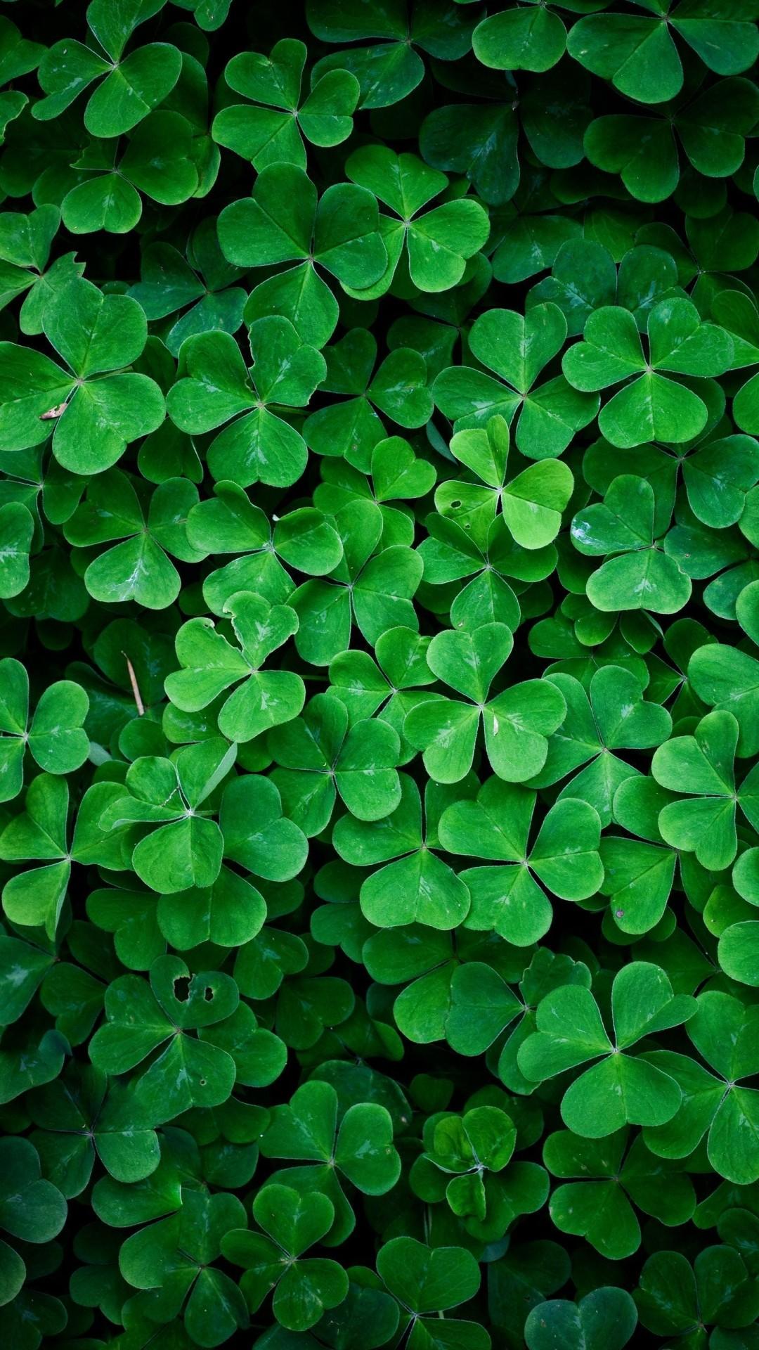 green nature hd retina wallpaper iphone 6 plus