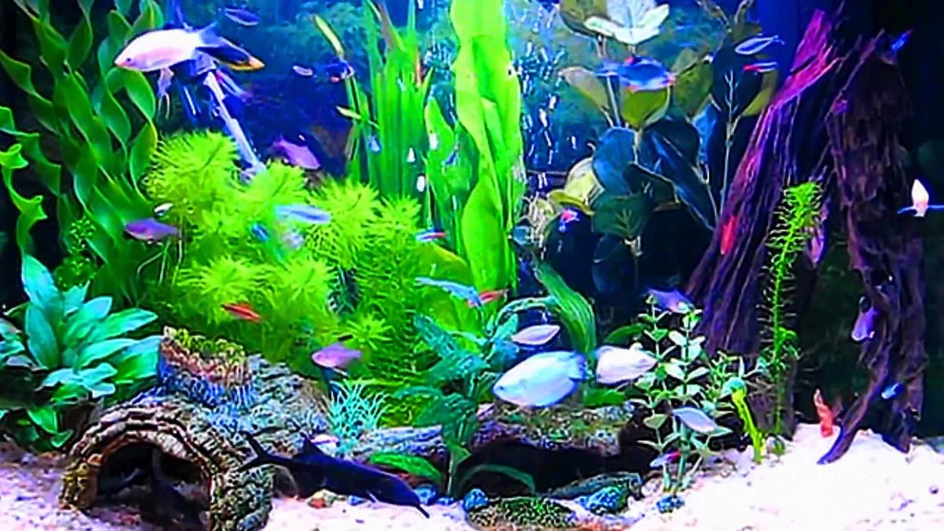 Amazing HD Aquarium ScreenSaver Free Windows and Android Full HD .