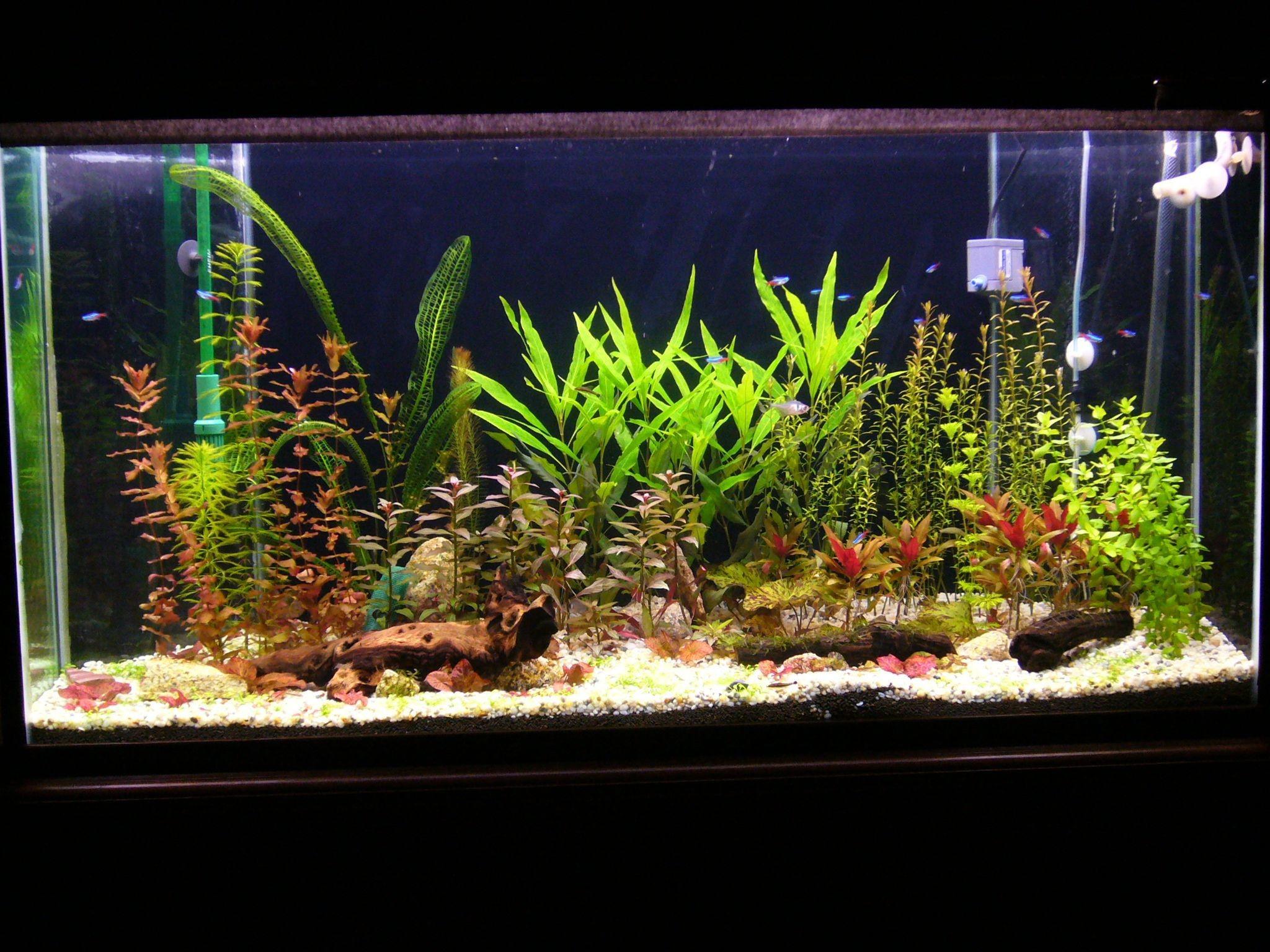 Full Size of Fish Tank Live Planted Aquarium Cheong Kim Tick Live Wallpaper  Fishium For Window10live …