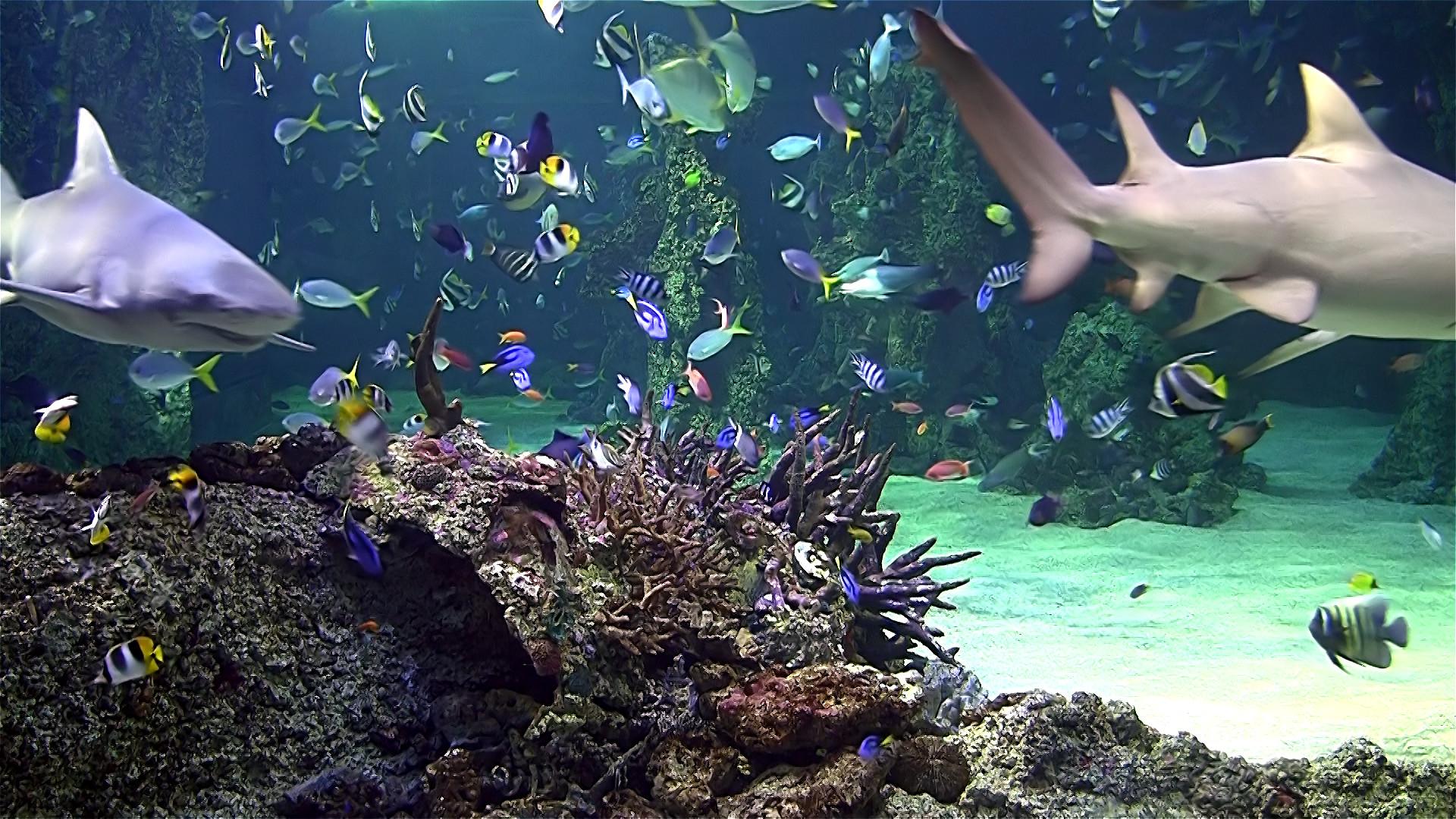 Aquarium Screensaver Free Download For Windows : Aquarium live hd tv: coral  reef scenes with