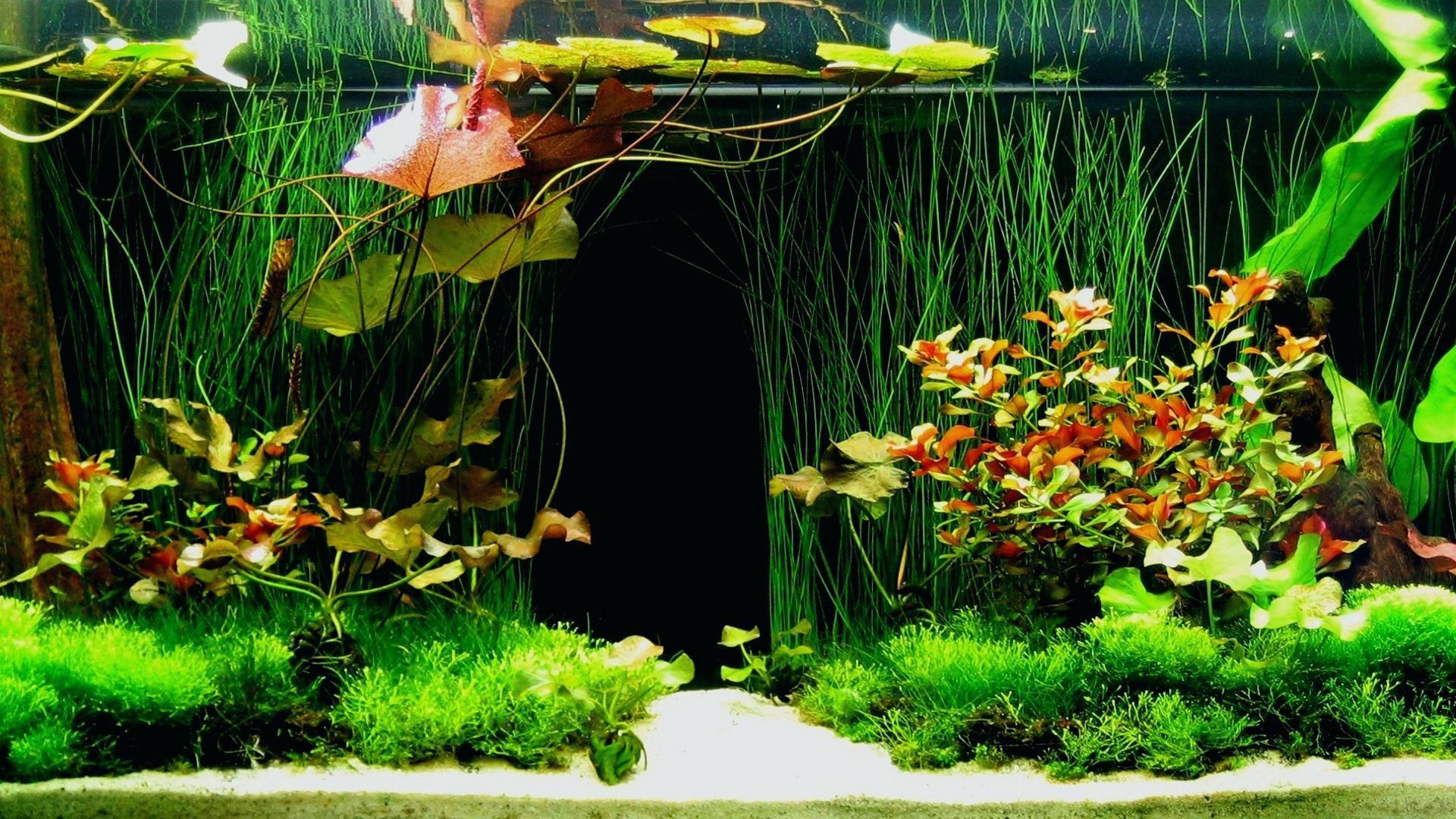 26 Gallon Bow Front Aquarium 6 Live Wallpaper Hd6 Rock Wall