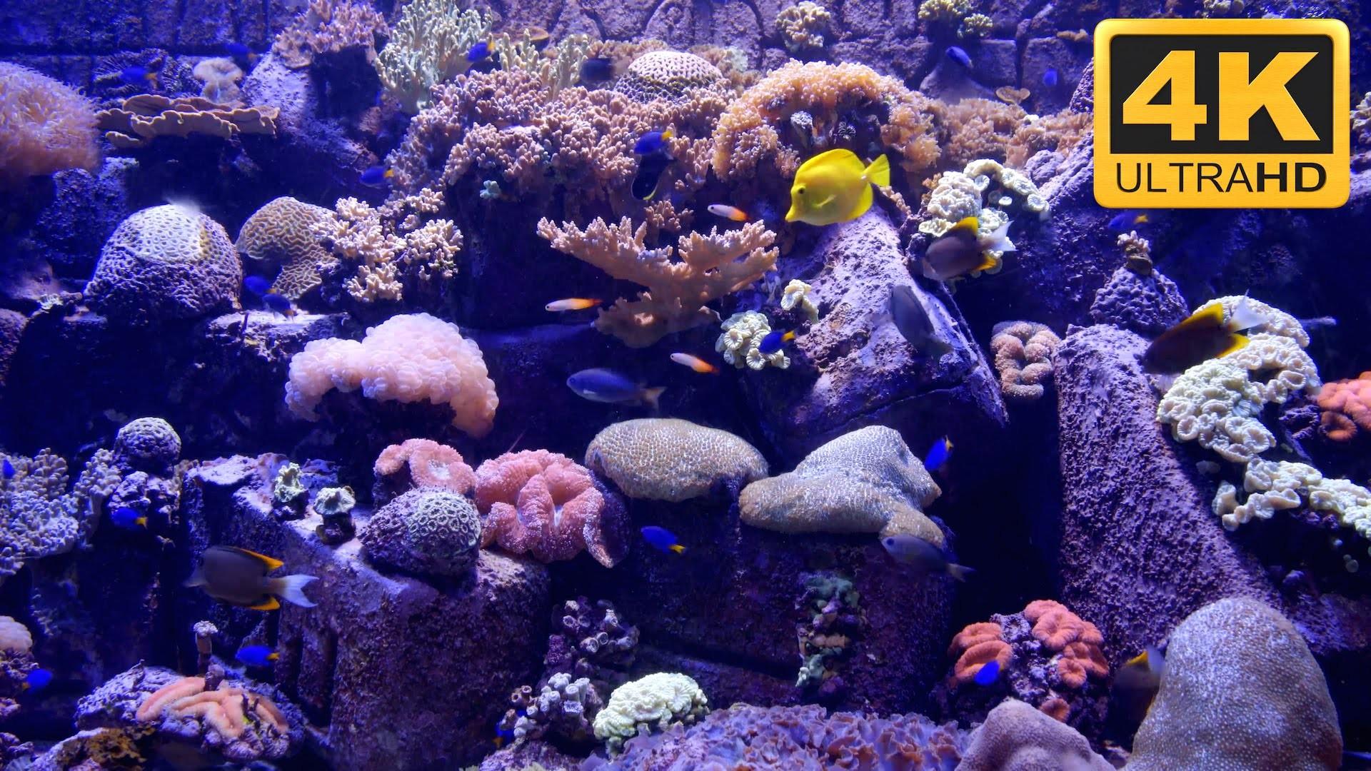… 4K Aquarium Screensaver and TV Wallpaper ***** – YouTube