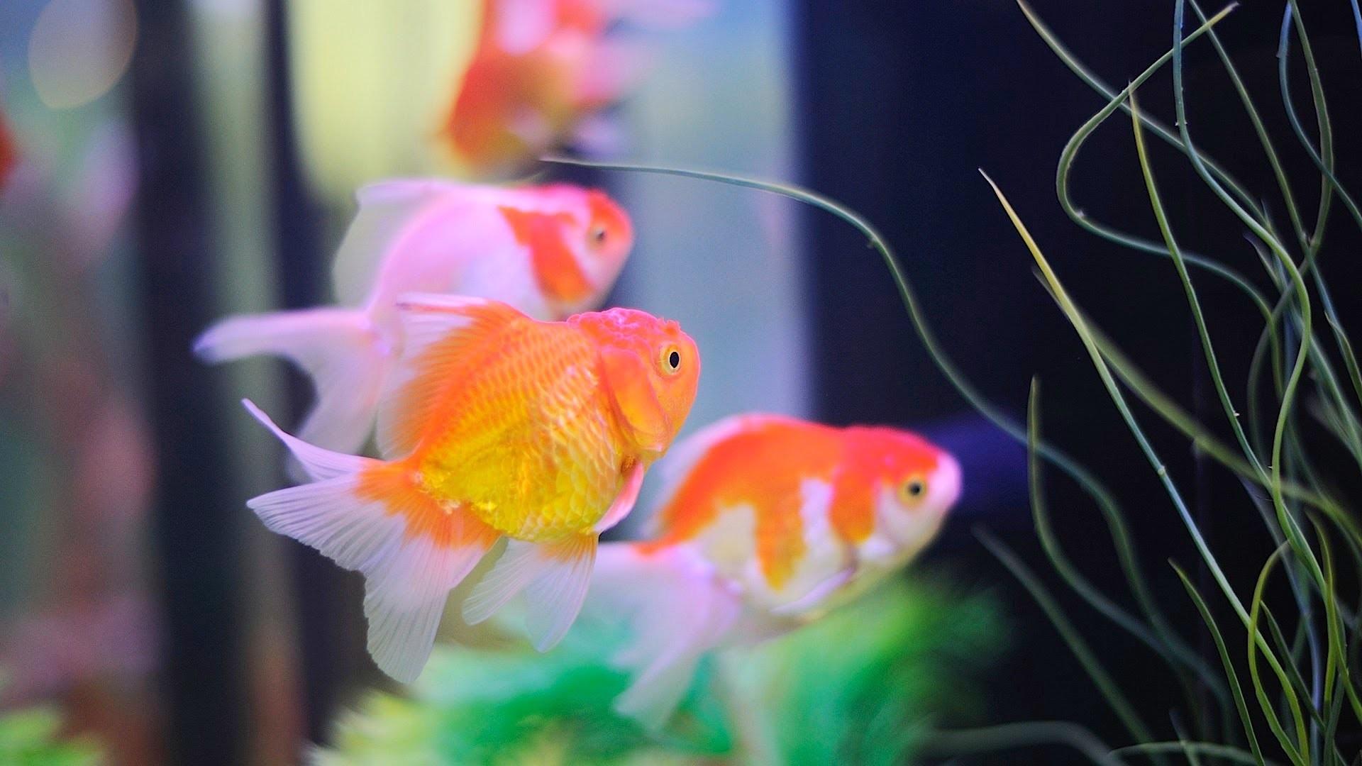 Full Size of Fish Tank Maxresdefault Live Fish Aquarium Singular Photos  Inspirations How To Keep Koi …