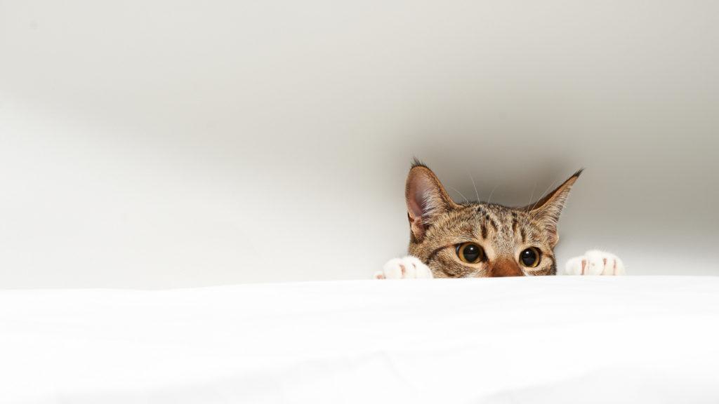 Cat Computer Wallpapers, Desktop Backgrounds     ID:414891
