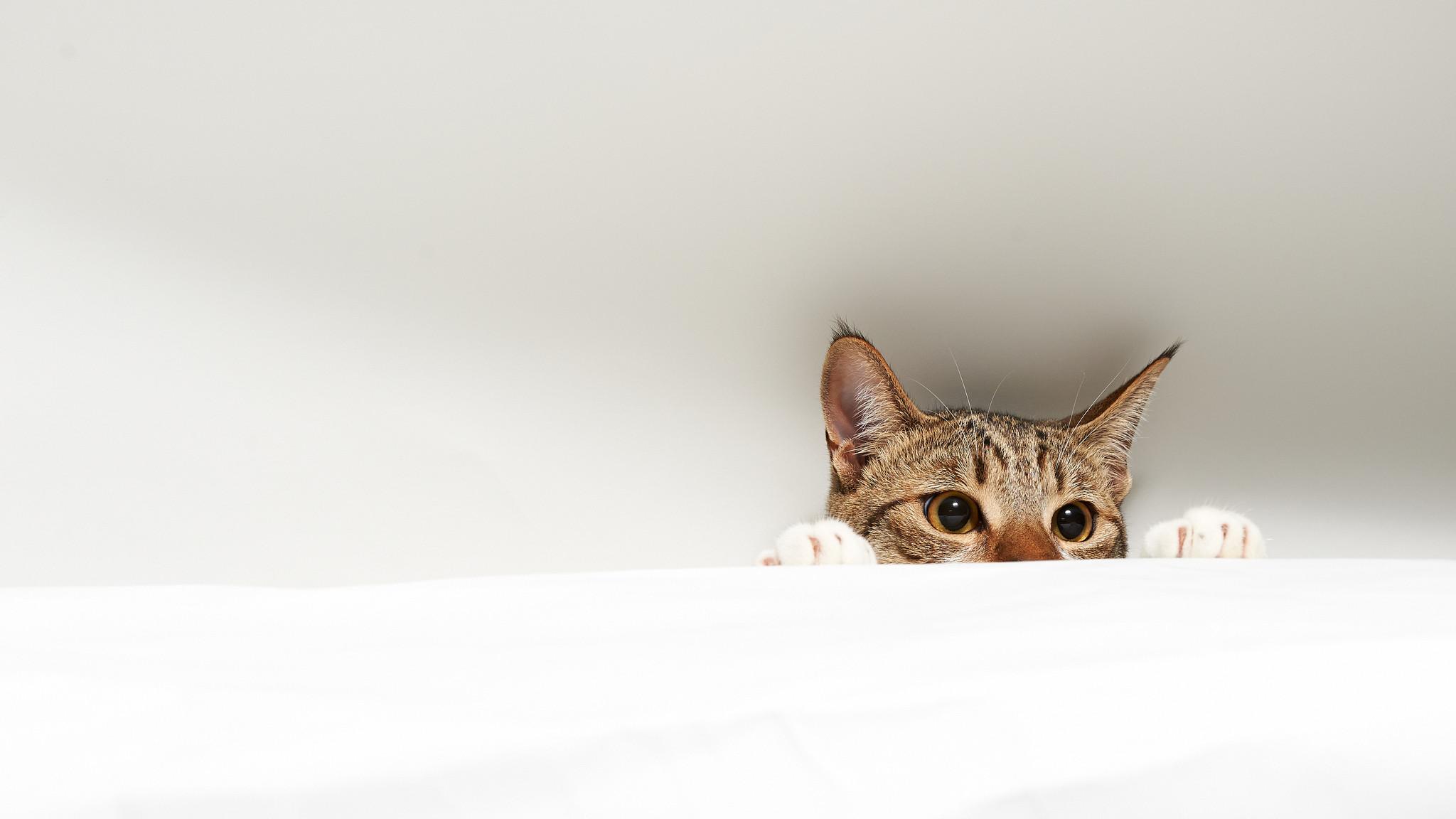 Cat Computer Wallpapers, Desktop Backgrounds | | ID:414891