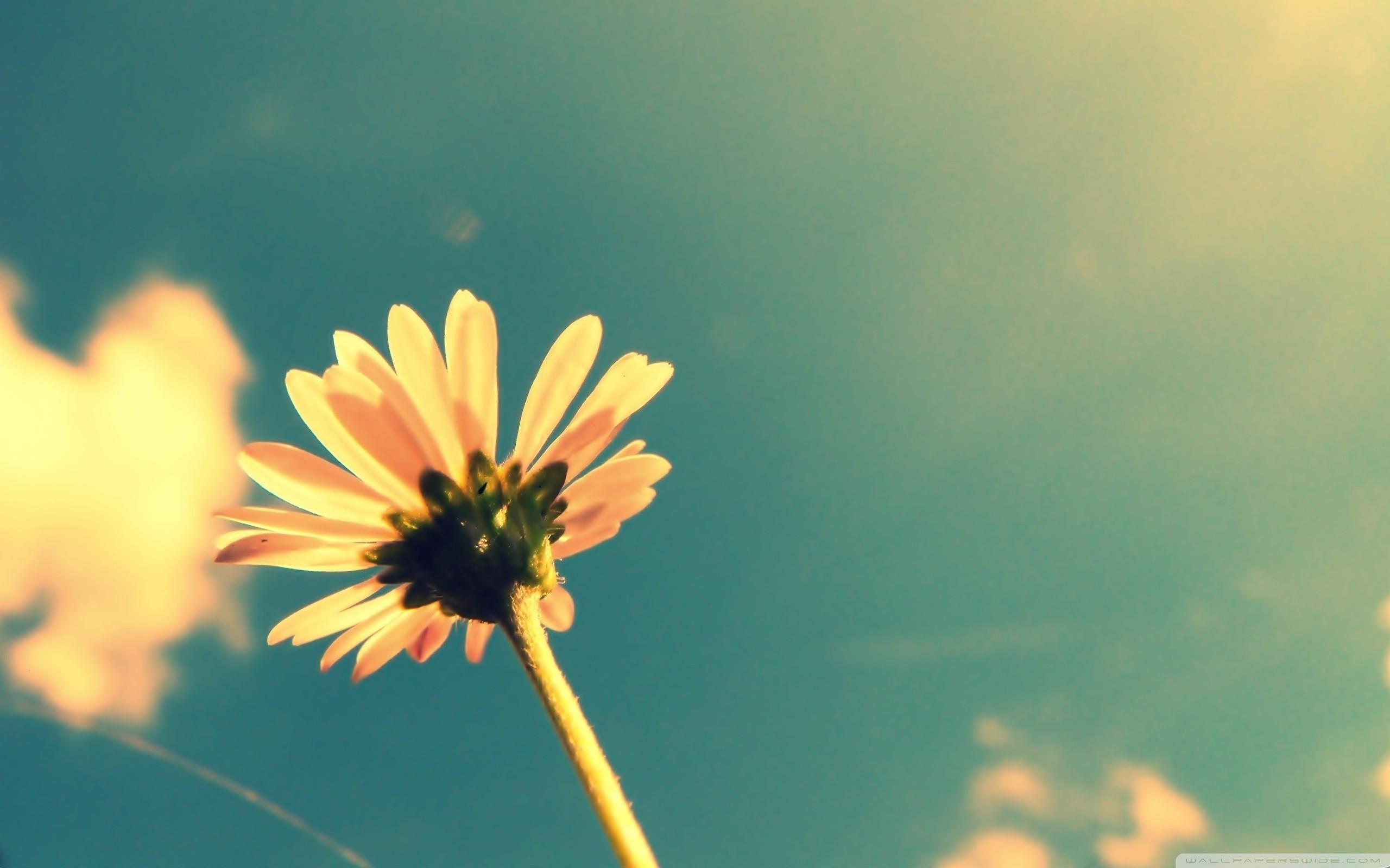 Flower-Hipster-Wallpaper-HD