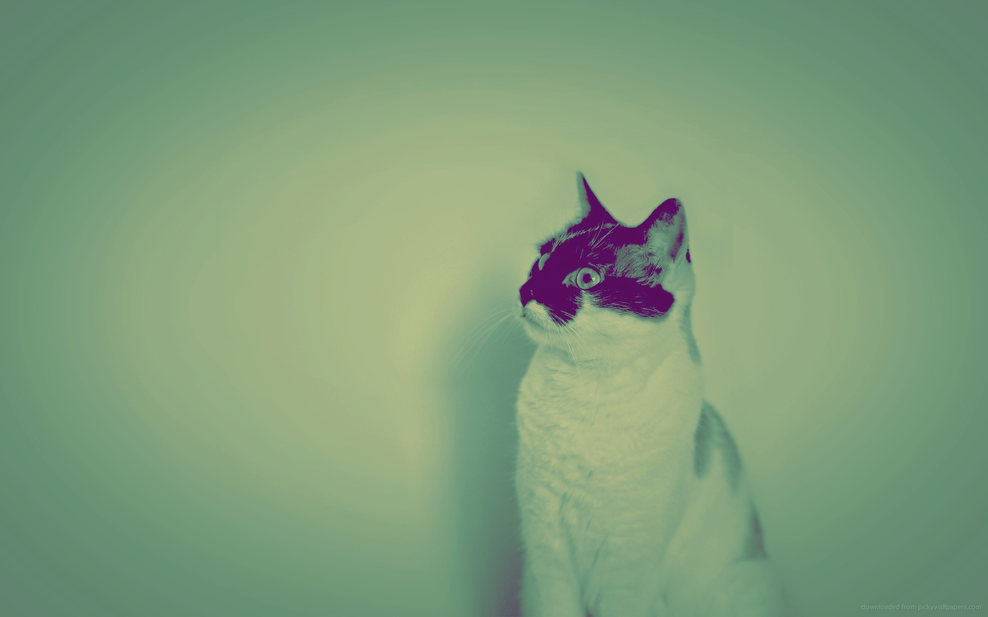 white-images2-alphacoders-wallpaper-black-photography-cat-photo-