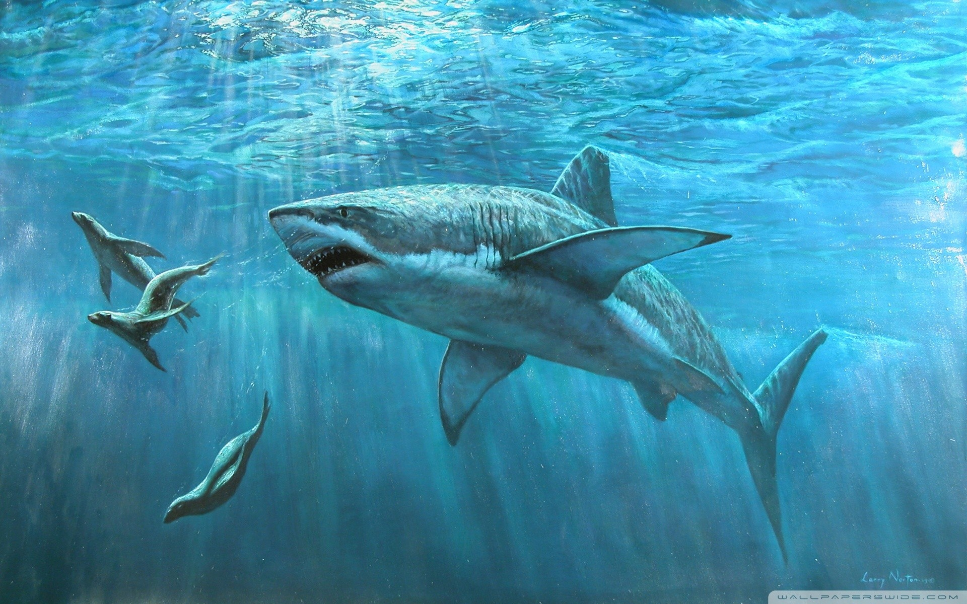 White Shark HD Wallpapers : Get Free top quality White Shark HD Wallpapers  for your desktop