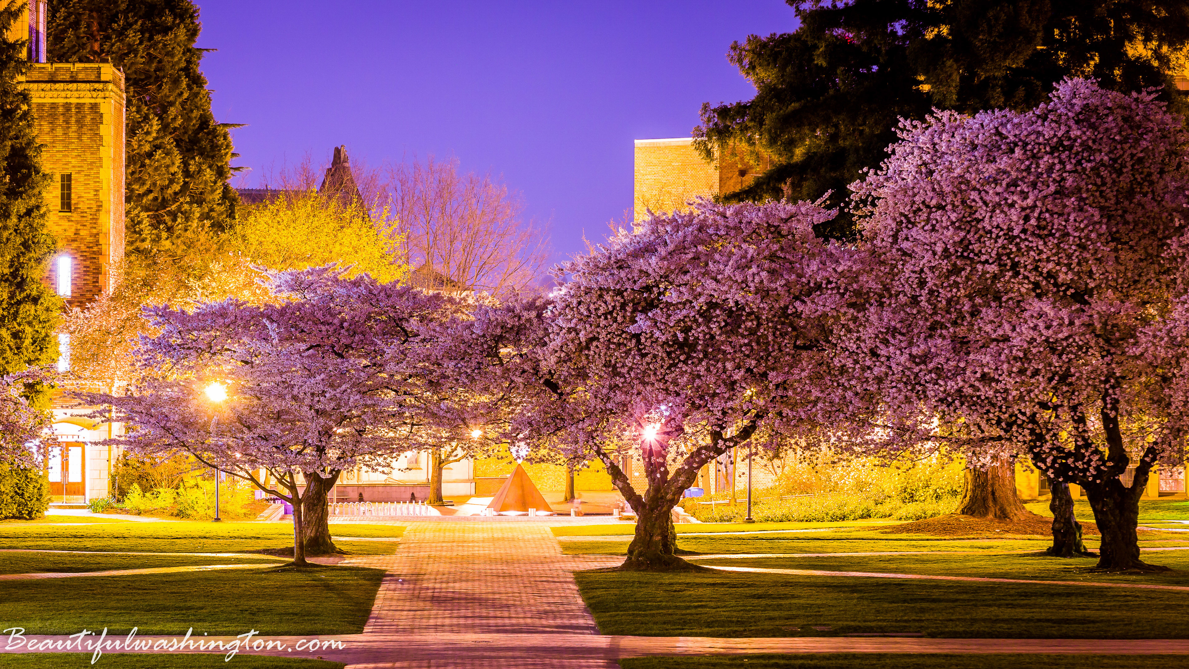 Cherry Blossom, University opf Washington – 2014 Cherry Blossom, University  opf Washington – 2014 …