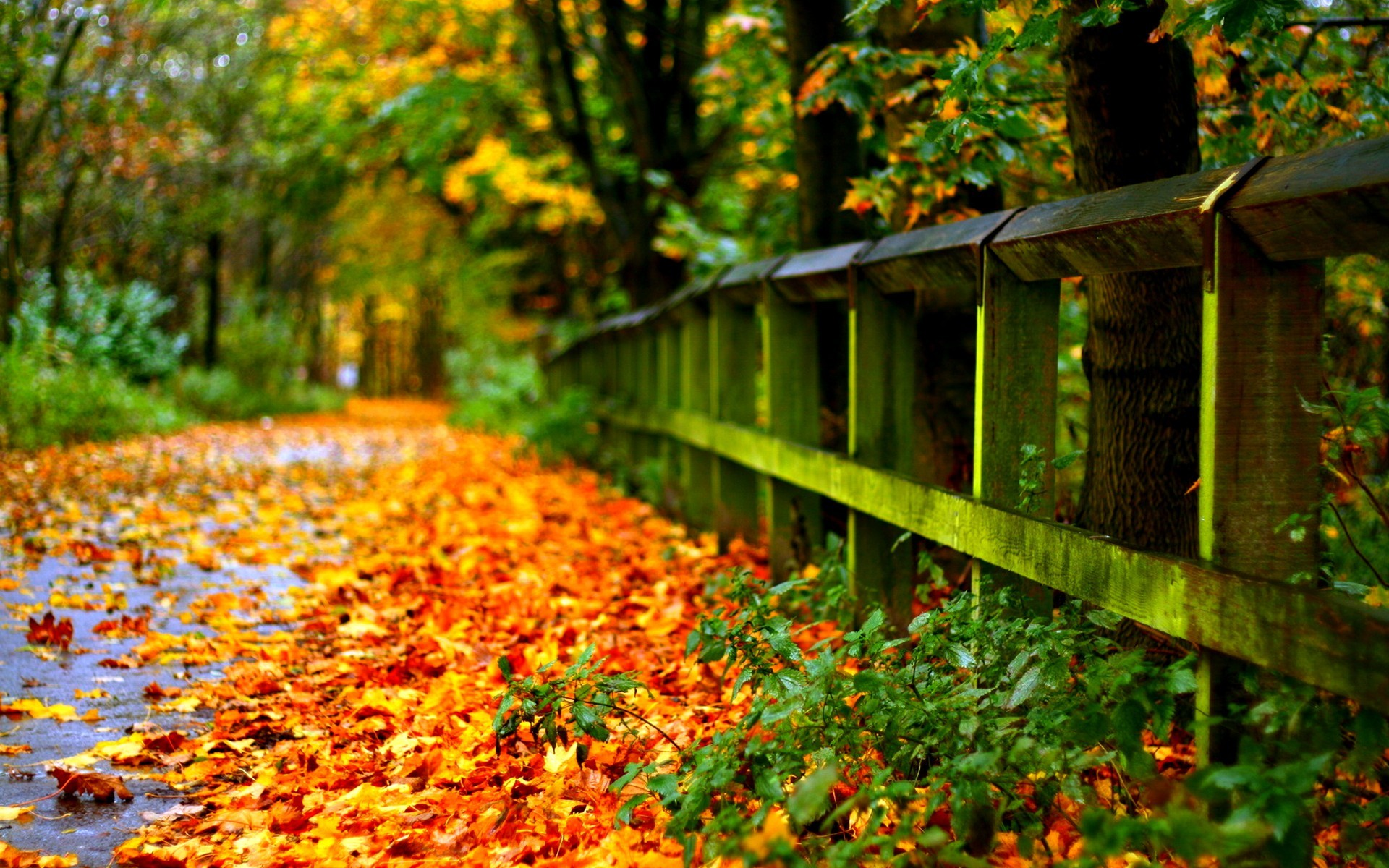 free laptop autumn photography hd wallpapers widescreen download