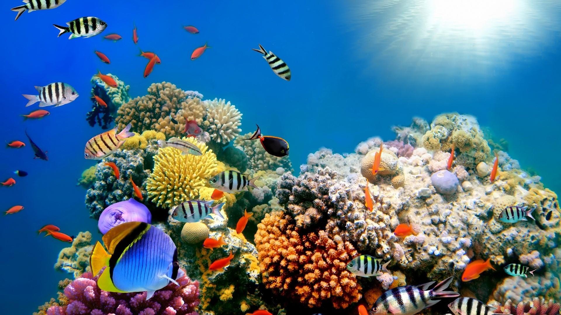 Desktop hd fish tank moving wallpaper